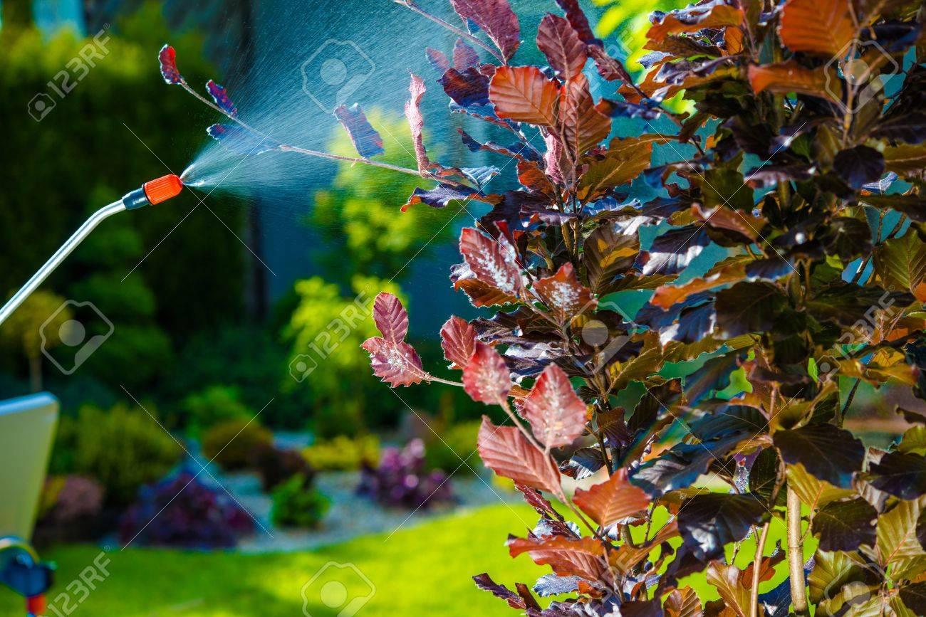 backyard garden pest control spraying small tree spraying in the garden stock photo - Home And Garden Pest Control