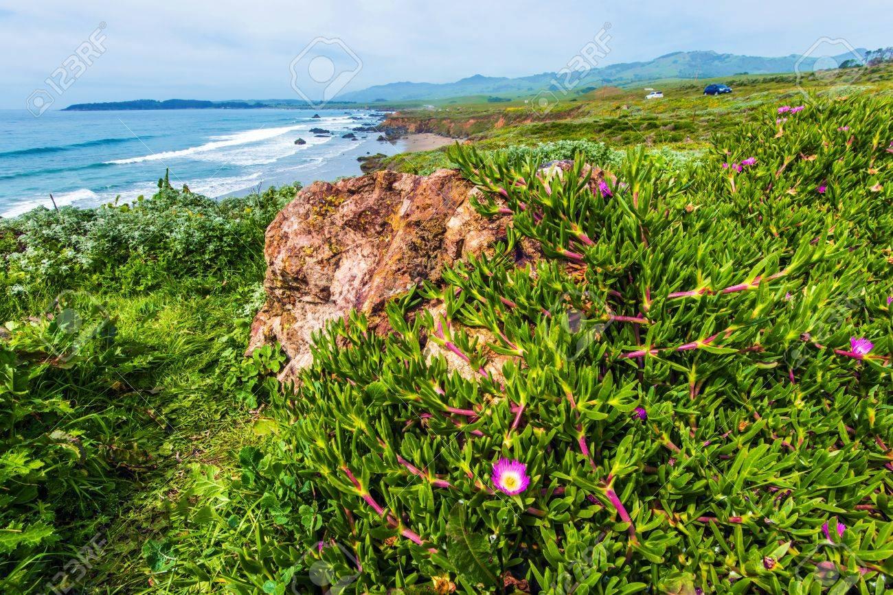 California Coastal Flora  Flowering Plants on the Ocean Cliff