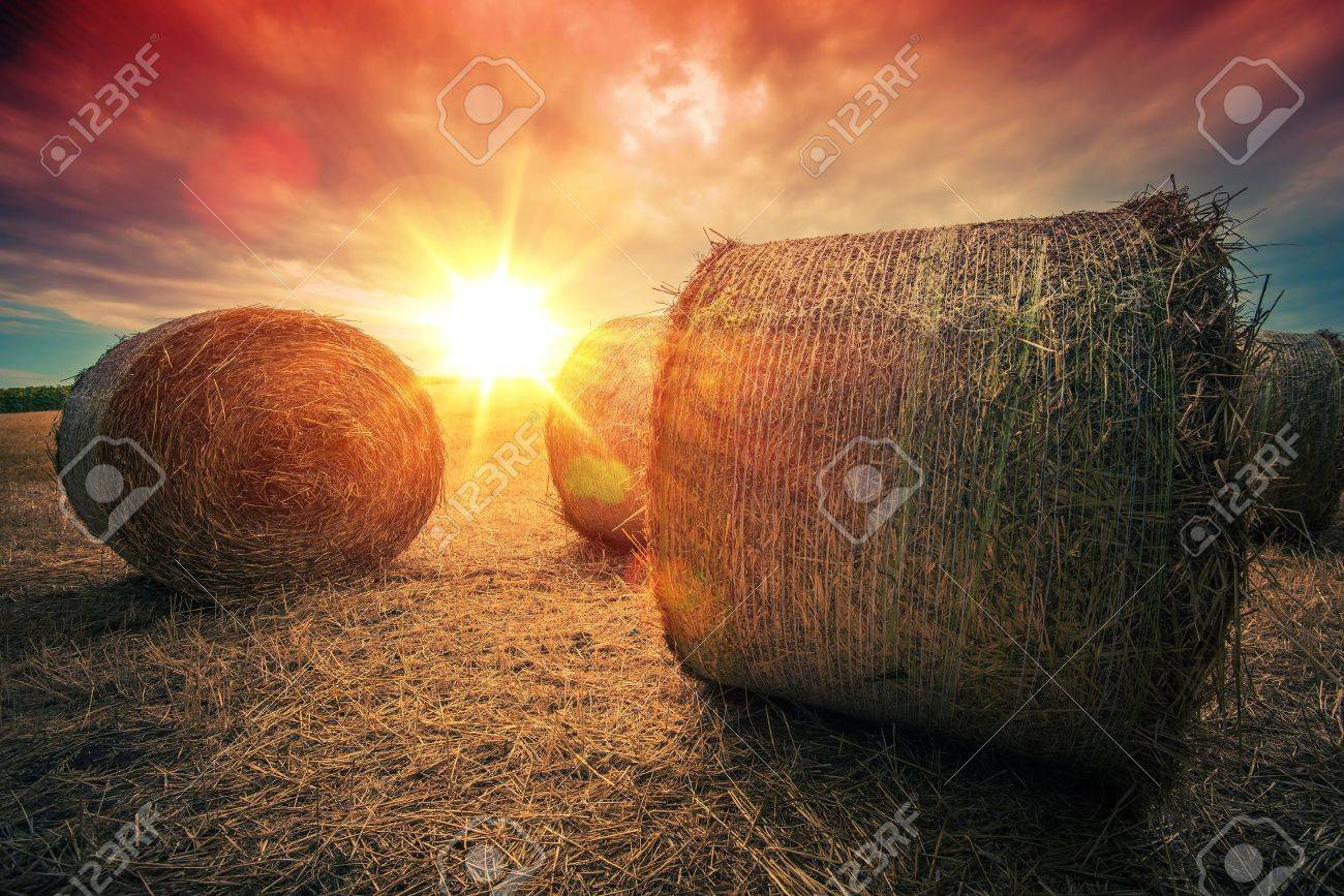 Baled Hay Rolls at Sunset. Hay Bales Countryside Landscape. Stock Photo - 43508335