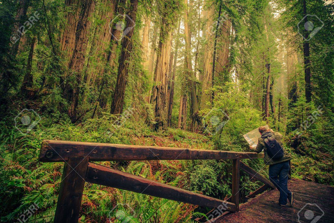 Hiker With Map On A Trail In The Redwood Forest National Park