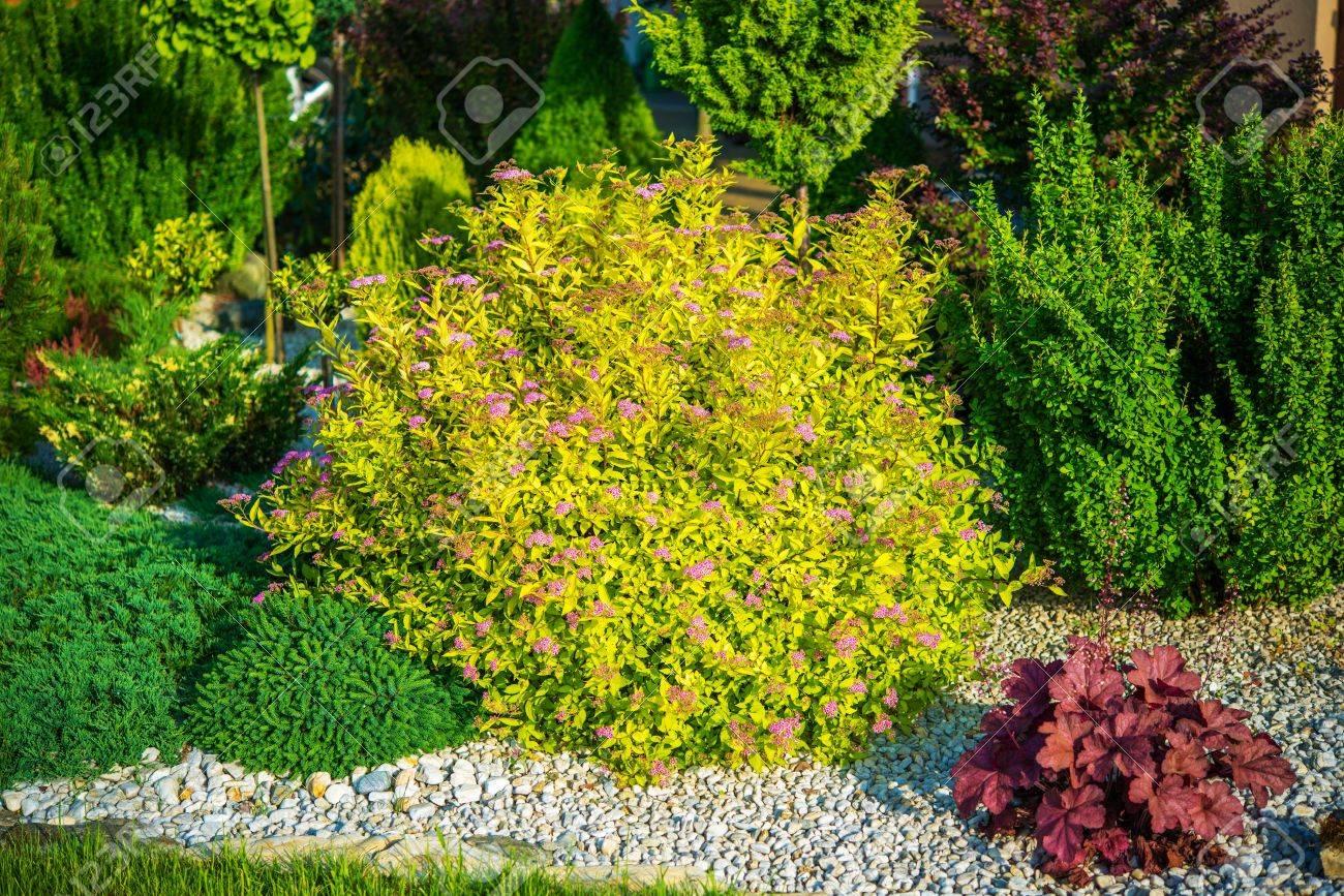 Frühlings Garten Pflanzen. Steingarten Pflanzen Nahaufnahme Foto.  Standard Bild   56892284