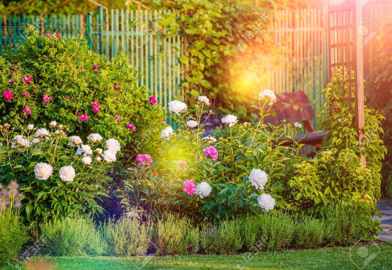 Sunny Blüte Hinterhof Garten Sommer Garten Blumen Lizenzfreie