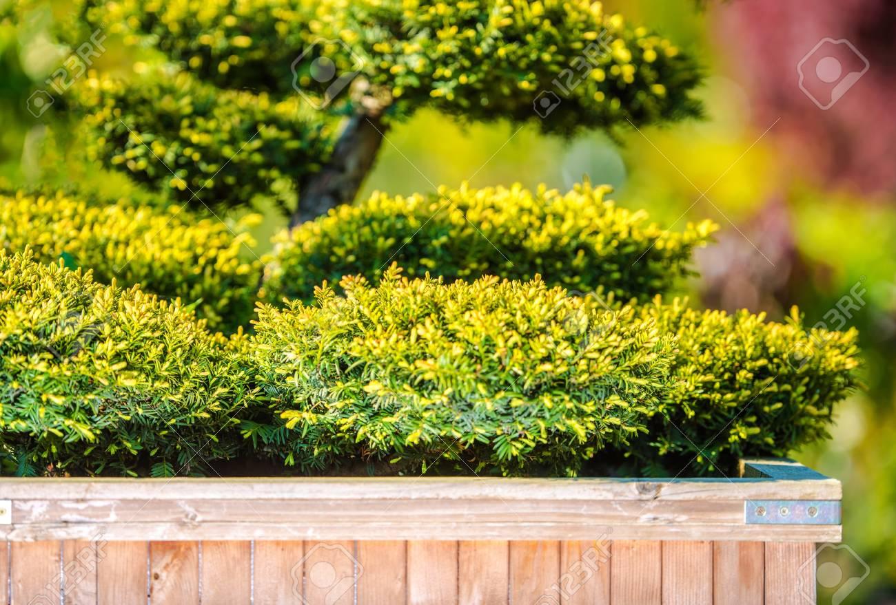 Charmant Garten Baum Deko : Hausgarten Baum Dekoration. Dekorative Pflanzen Für Das  Moderne