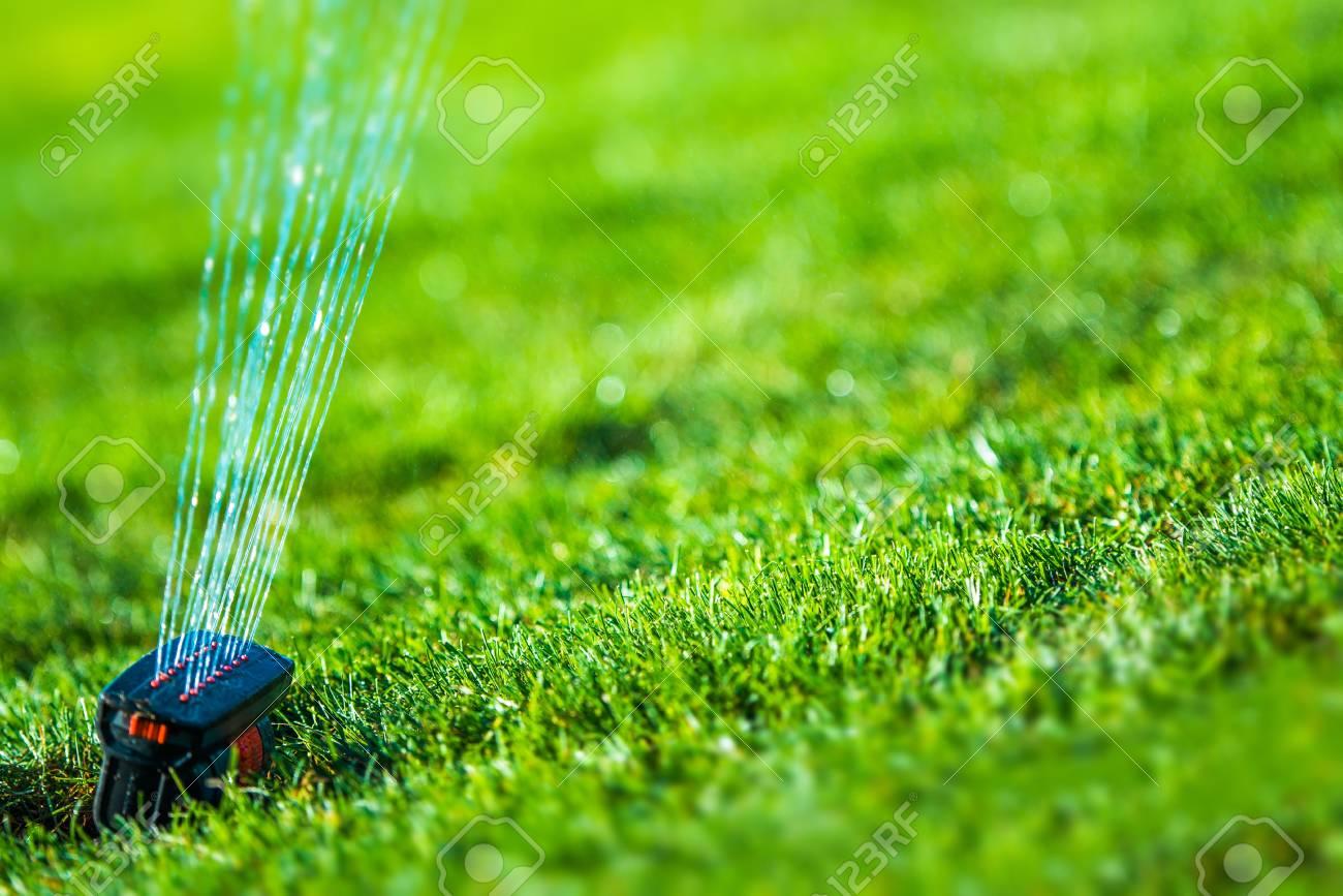 Garden Grass Sprinkler Closeup Photo Gardening And Landscaping