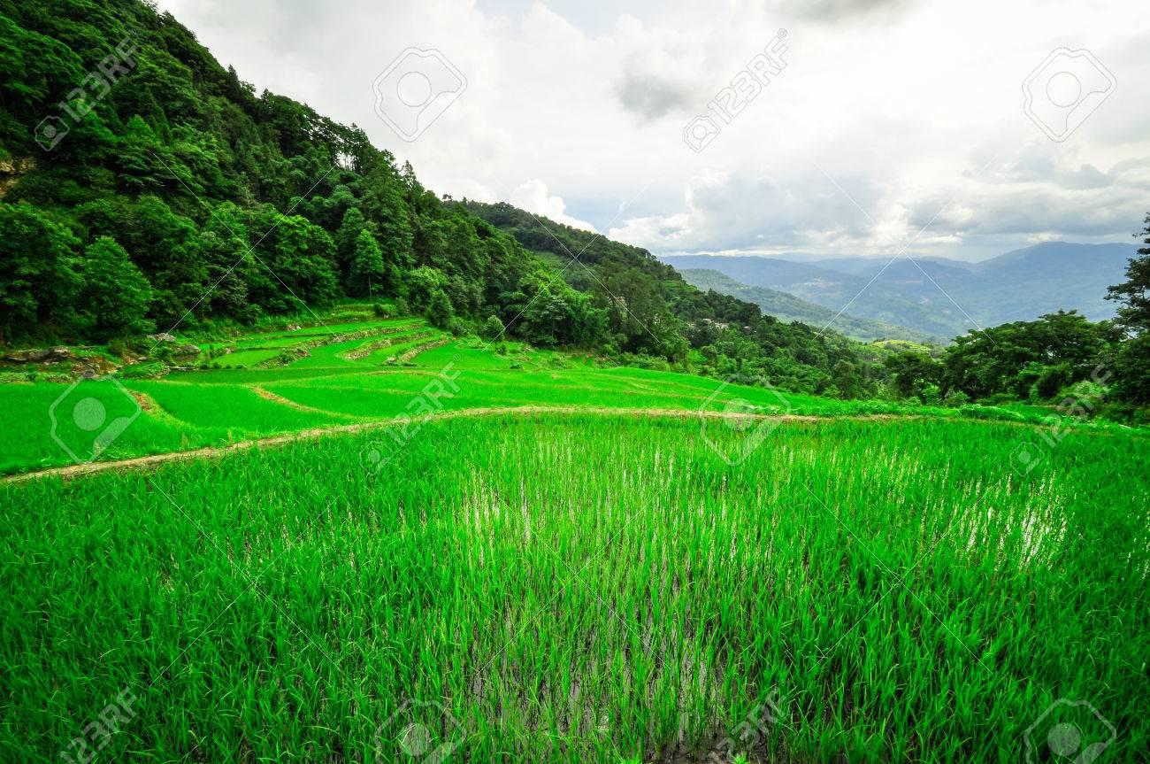 Terrazas De Arroz En Las Tierras Altas Del Sureste De China Cortijos Pueblo étnico Terrazas De Arroz Arrozales De Asia Pueblo Campesino En Las
