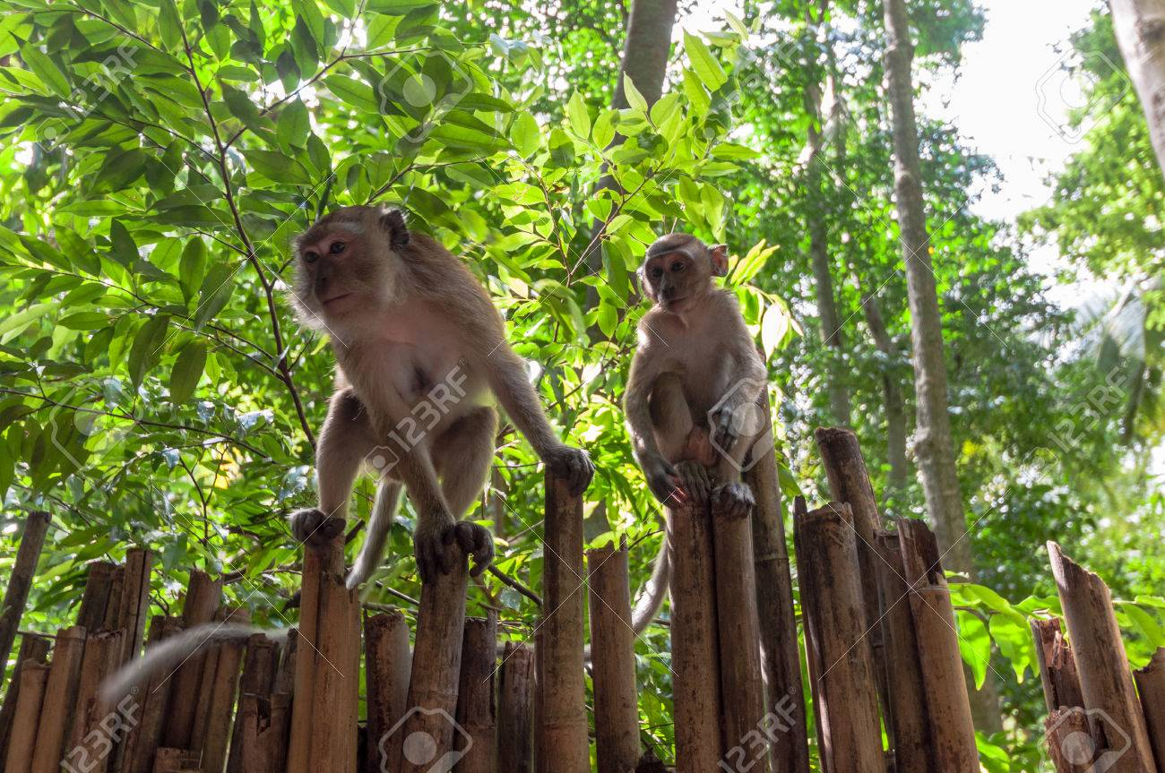 Wild Monkeys Railay Beach In Krabi Thailand
