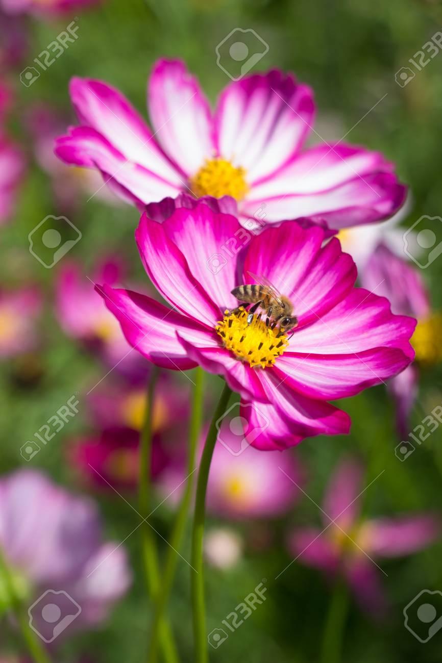 Beautiful colorful winter flowers stock photo picture and royalty beautiful colorful winter flowers stock photo 49935459 izmirmasajfo