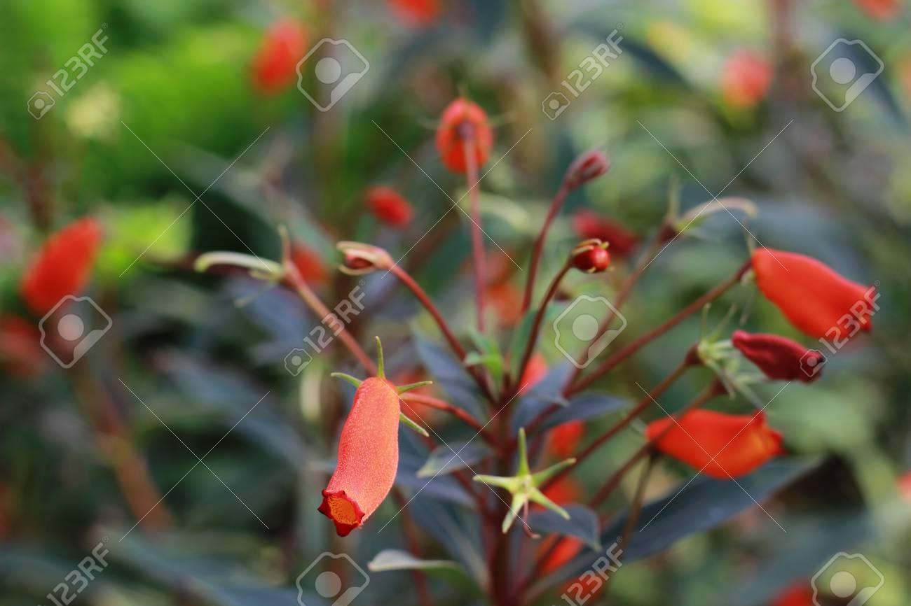 Beautiful colorful winter flowers stock photo picture and royalty beautiful colorful winter flowers stock photo 49936660 izmirmasajfo