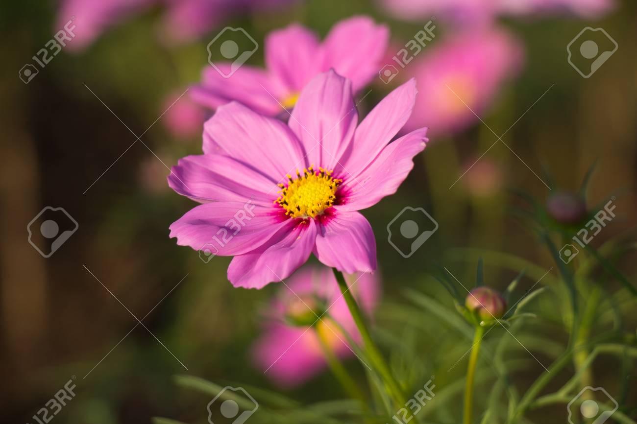 Beautiful colorful winter flowers fotos retratos imgenes y beautiful colorful winter flowers foto de archivo 82803727 izmirmasajfo