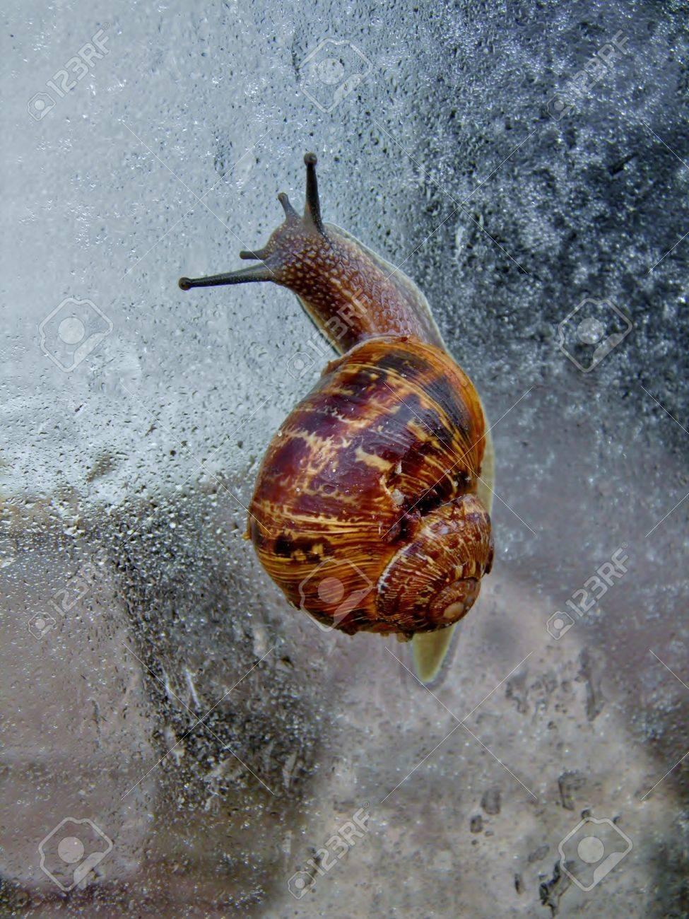 macro image of snail on window pane with rain drops stock photo