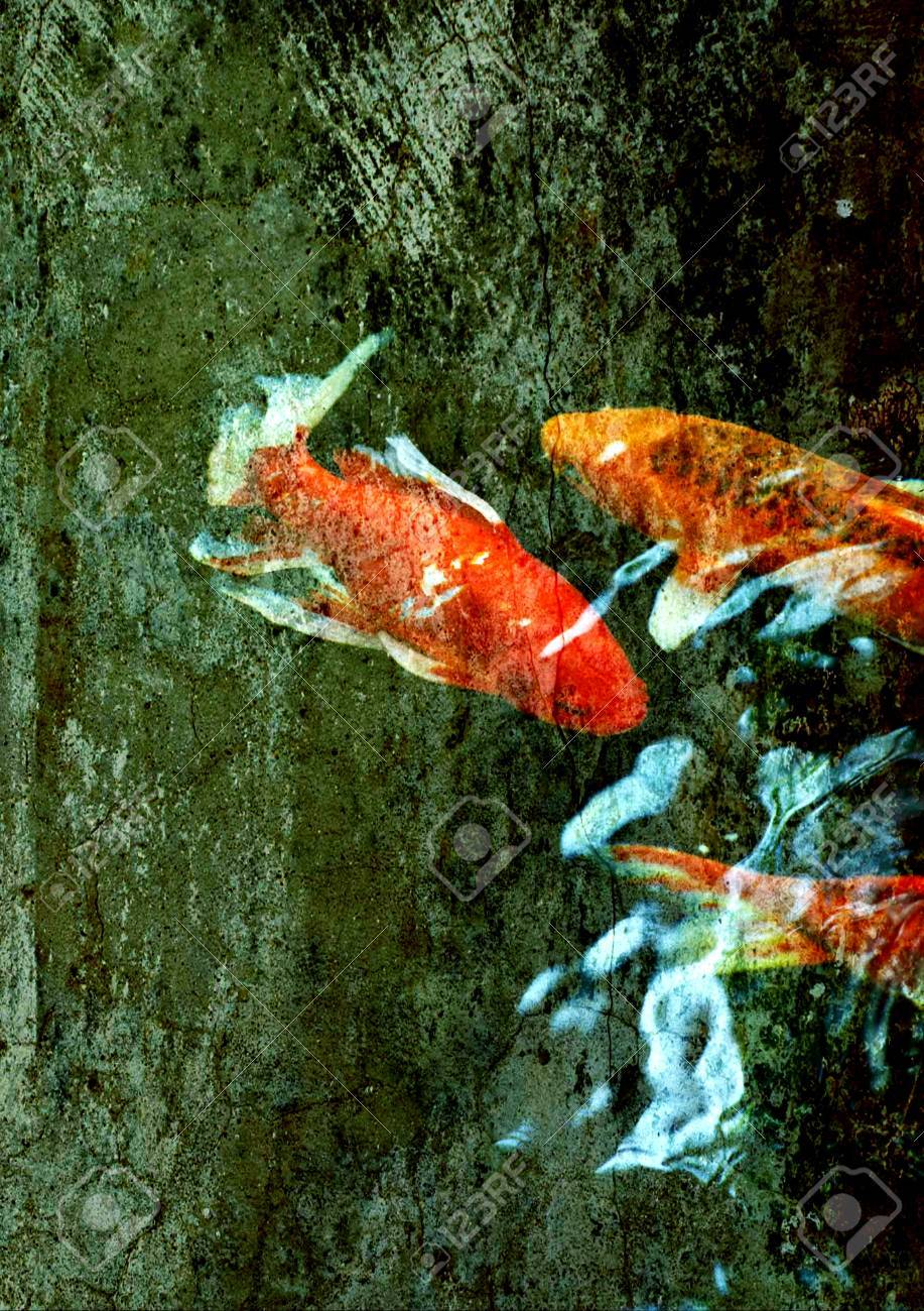 Colorful Ornamental Koi Fish In Pond Stock Photo, Picture And ...