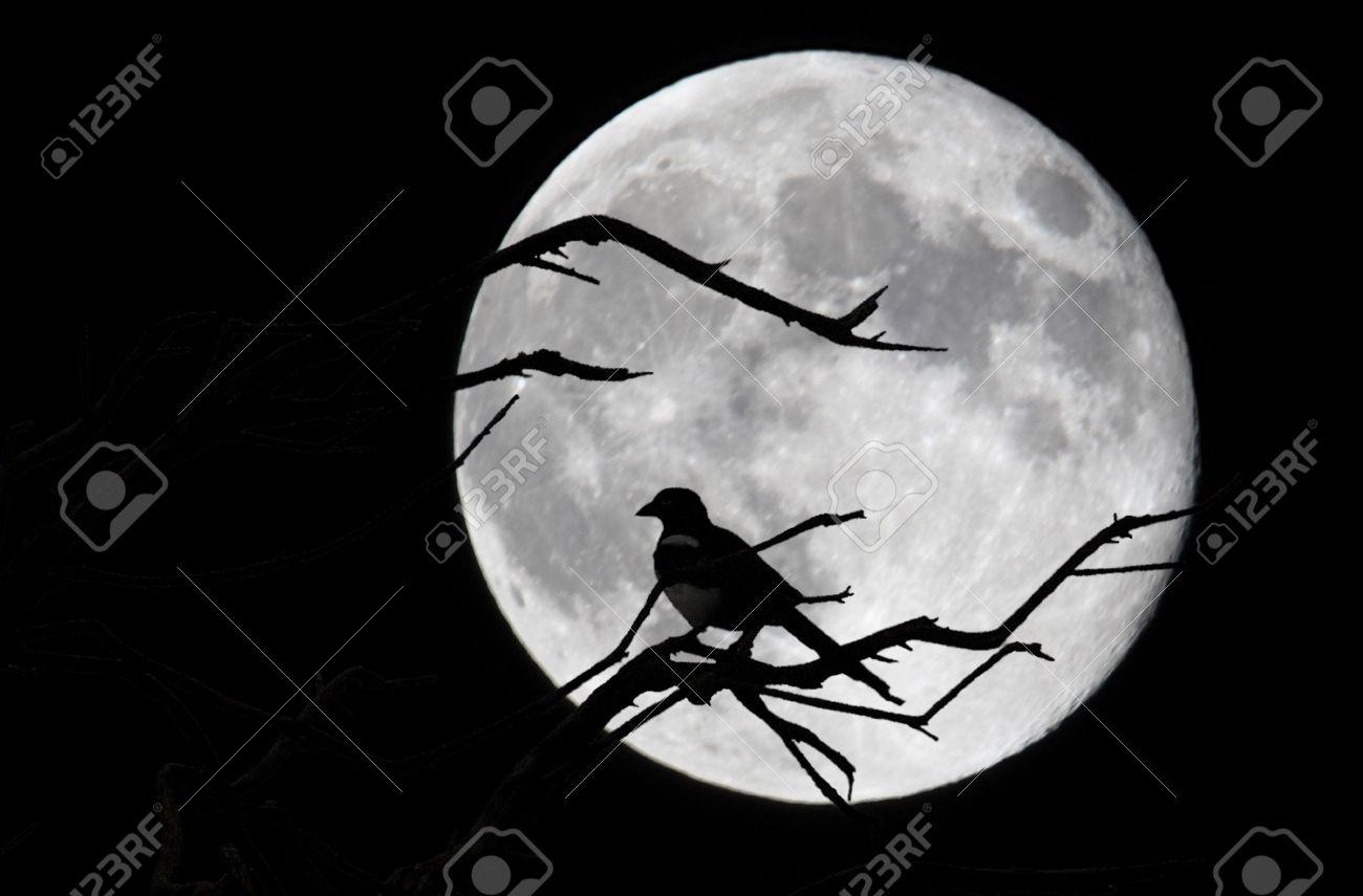Bird and moon in Asturias, Spain Stock Photo - 5490195