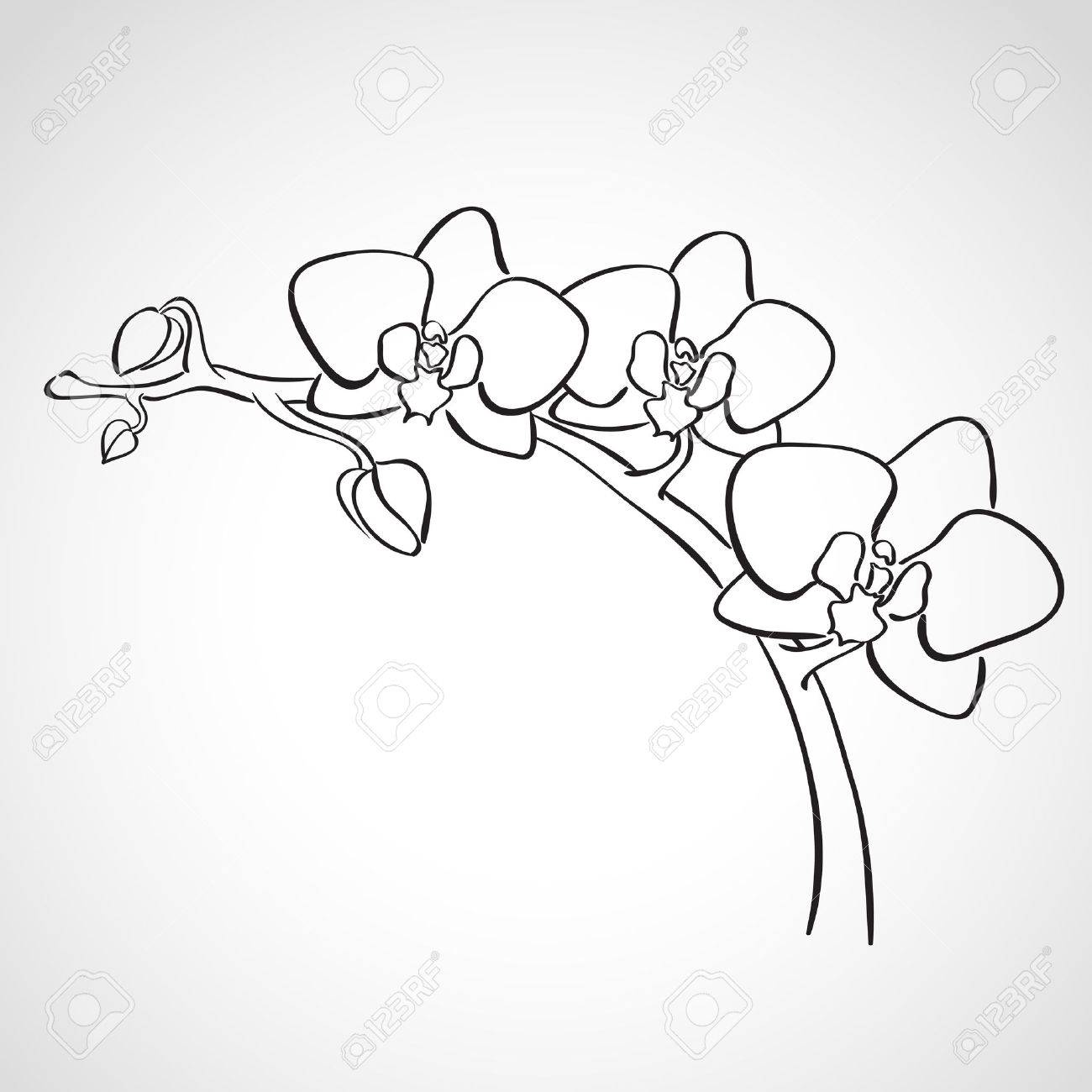 Sketch orchid branch, hand drawn, ink style - 27321478