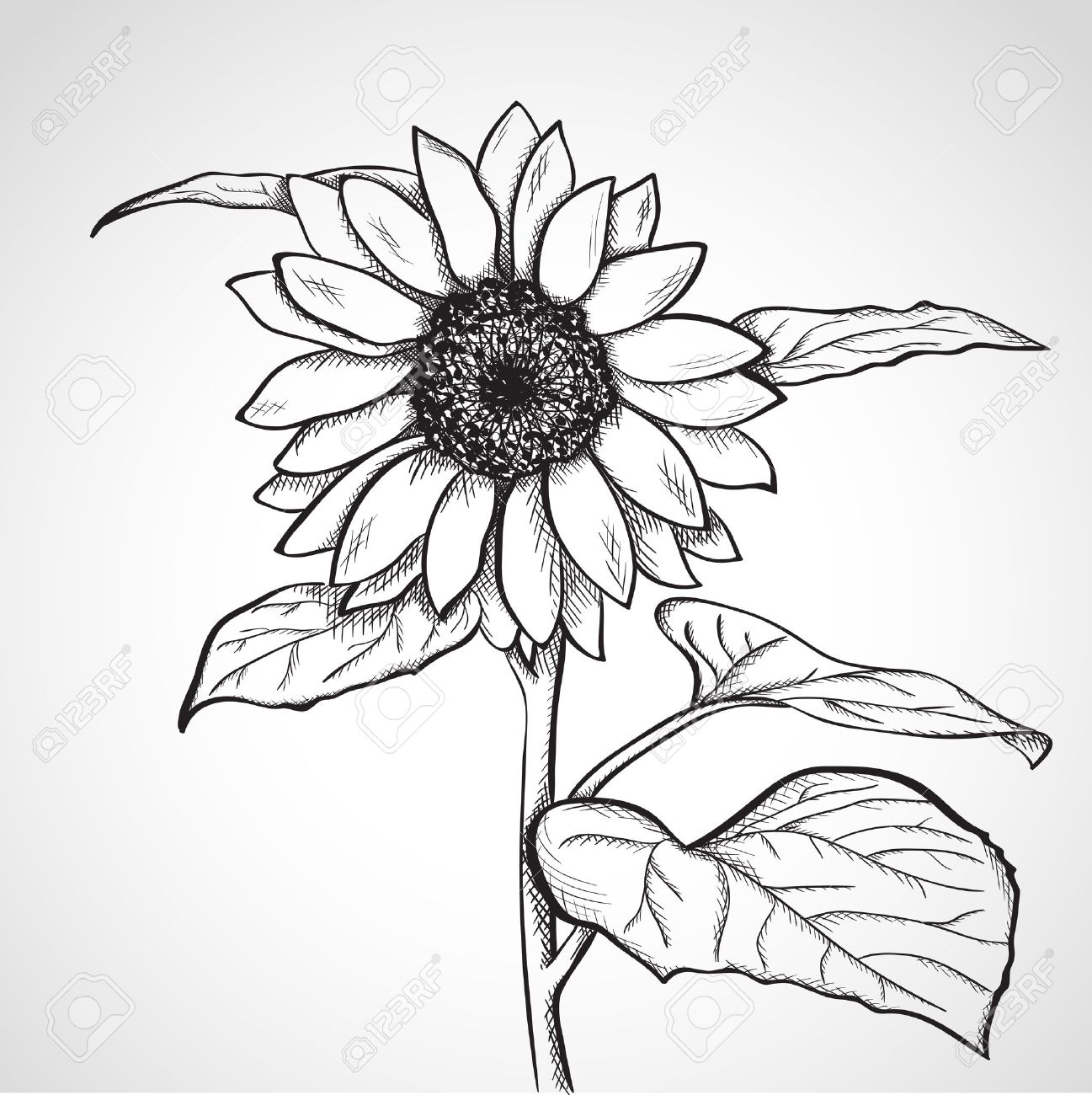28,969 Sunflower Cliparts, Stock Vector And Royalty Free Sunflower ... for Clipart Sunflower Black And White  66pct