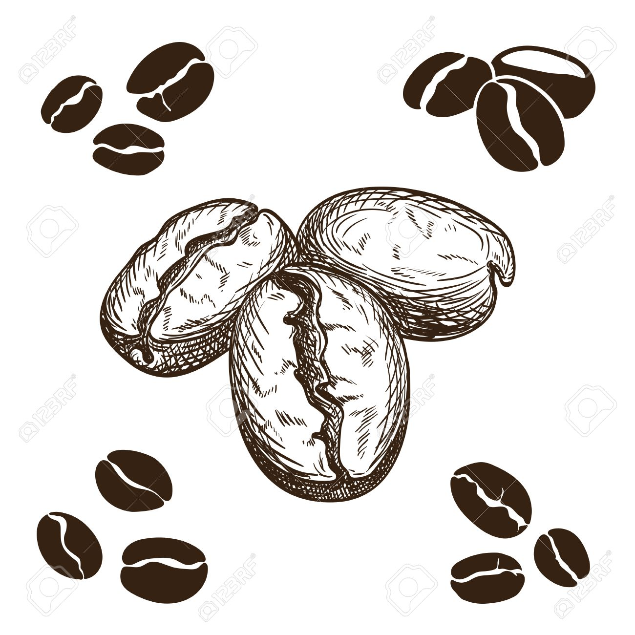 Silhouette And Hand Drawn Coffee Beans Stock Vector