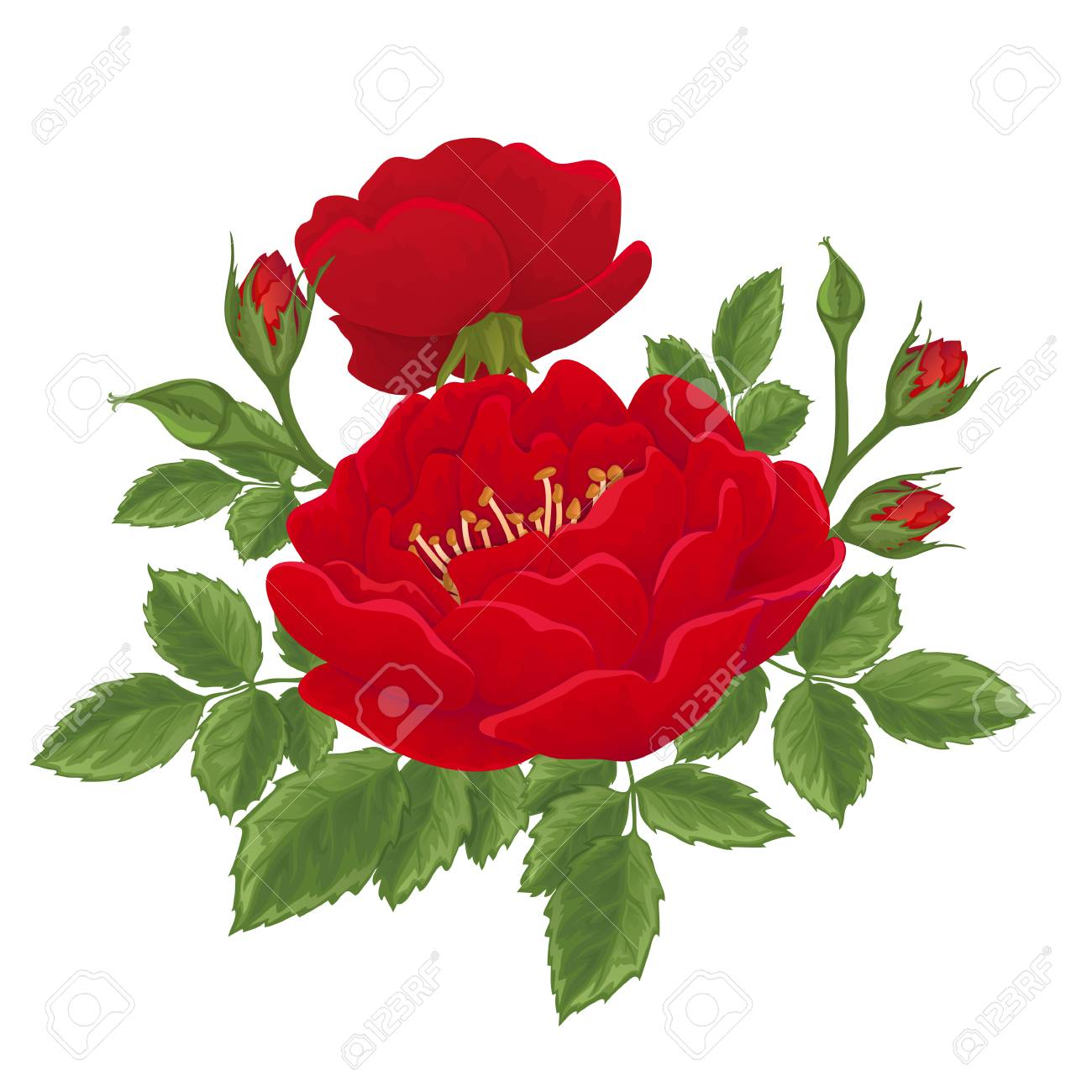 English Red Rose Graphic Flowers. For Wedding Invitation Or ...
