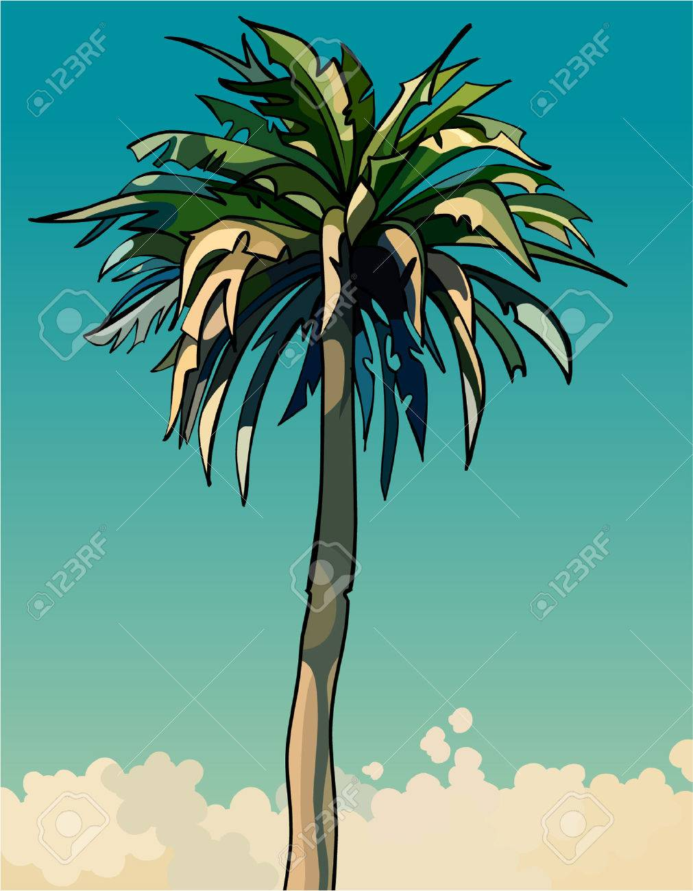 cartoon drawn tall sprawling decorative palm tree - 66771759