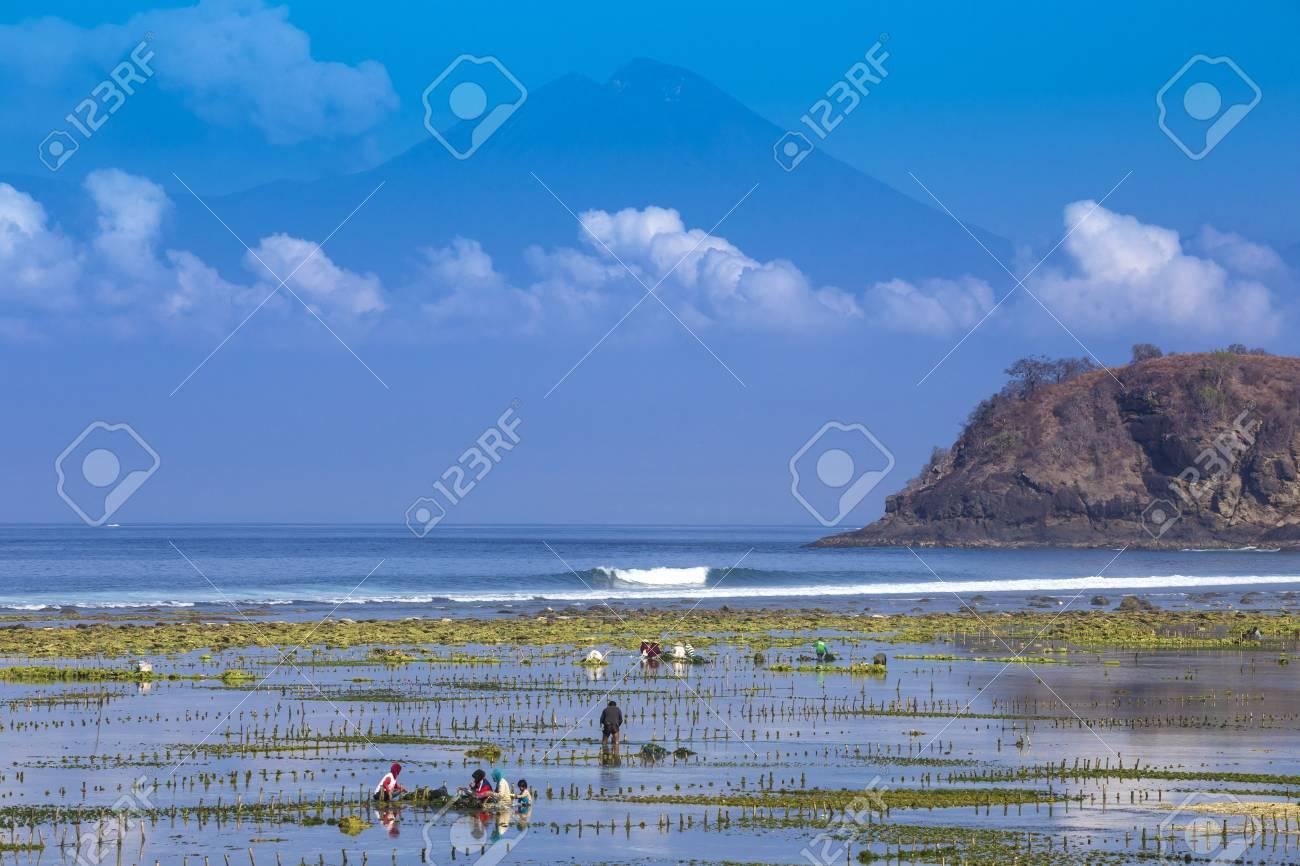 スンバワ島