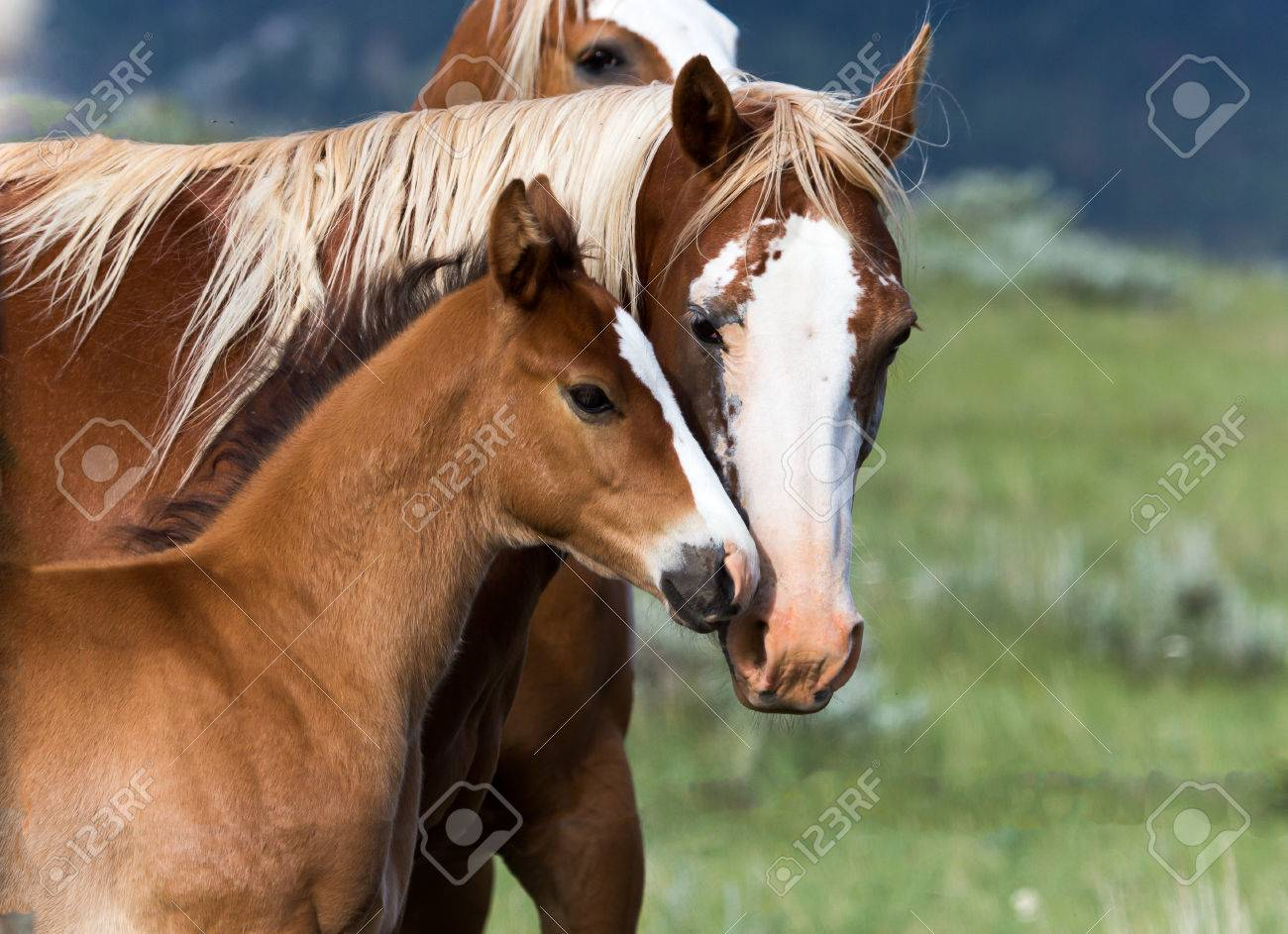 Mother And Baby Horse Stock Photo Picture And Royalty Free Image Image 24814658