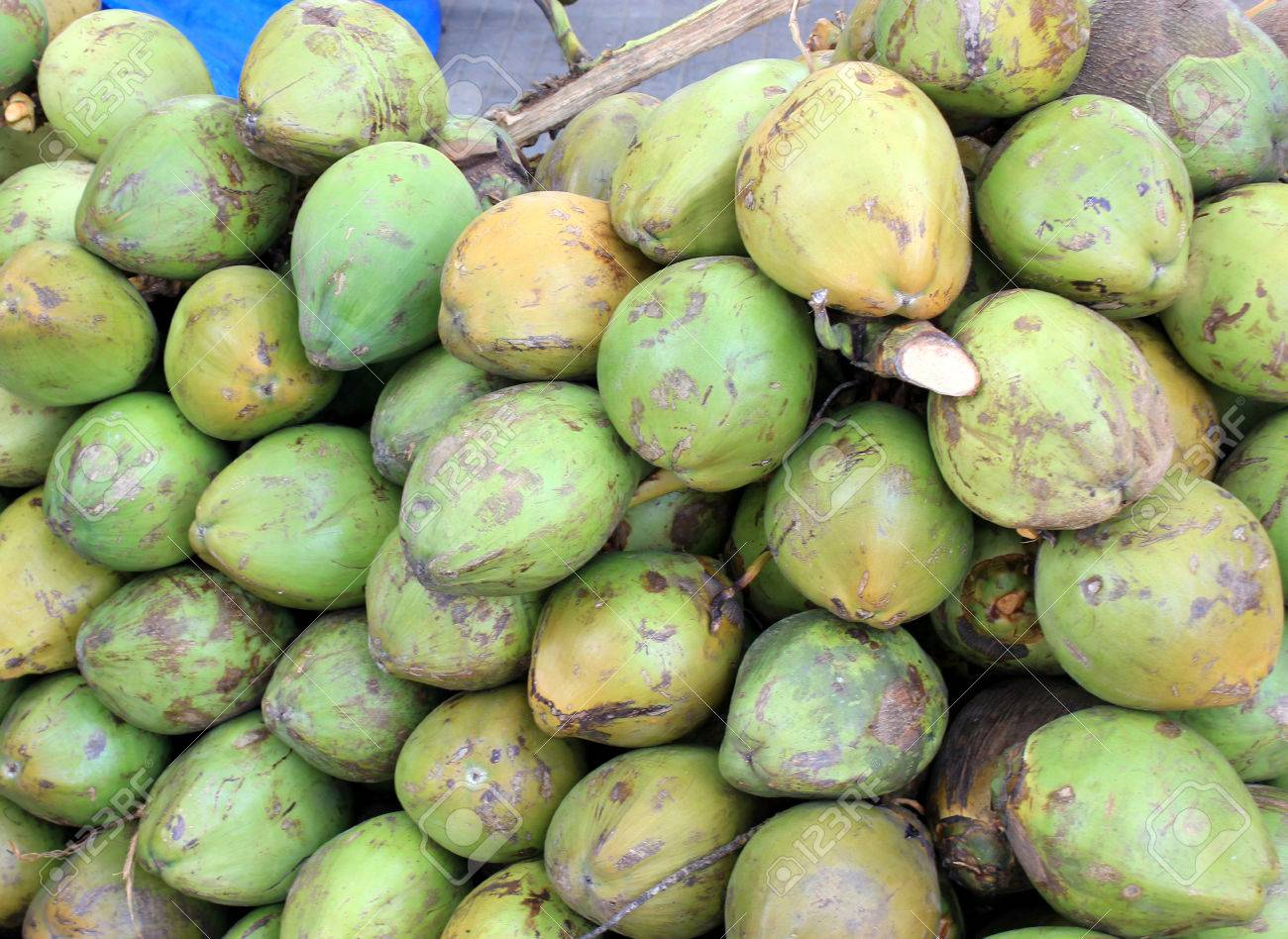 Coconut fruits, Cocos nucifera, multipurpose plant with young fruits yielding cooling drink, copra in puddings and seasoning, husk for stuffing Stock Photo - 22709466