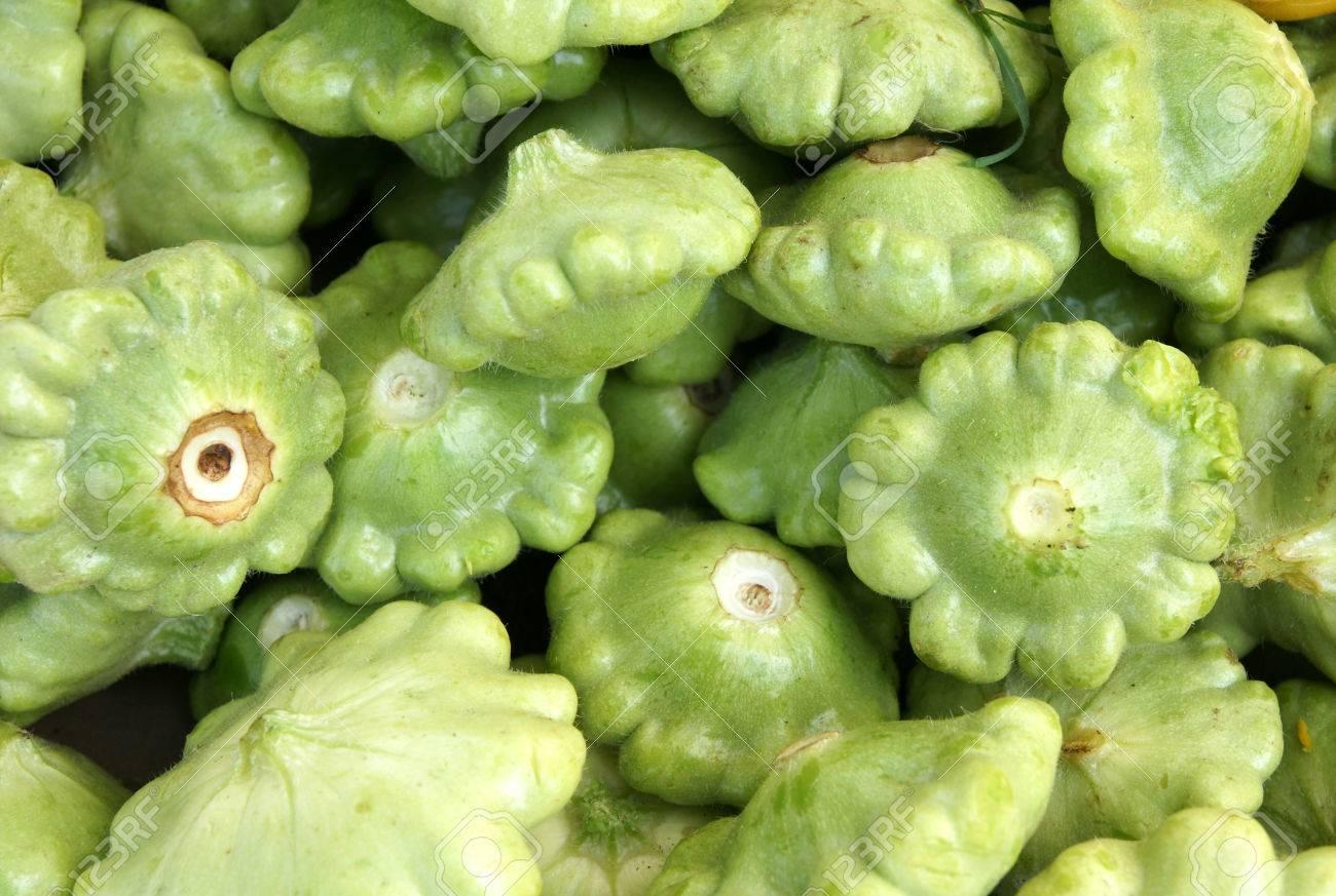 Green Patty Pan Squash Cucurbita Pepo Vine With Yellow Flowers
