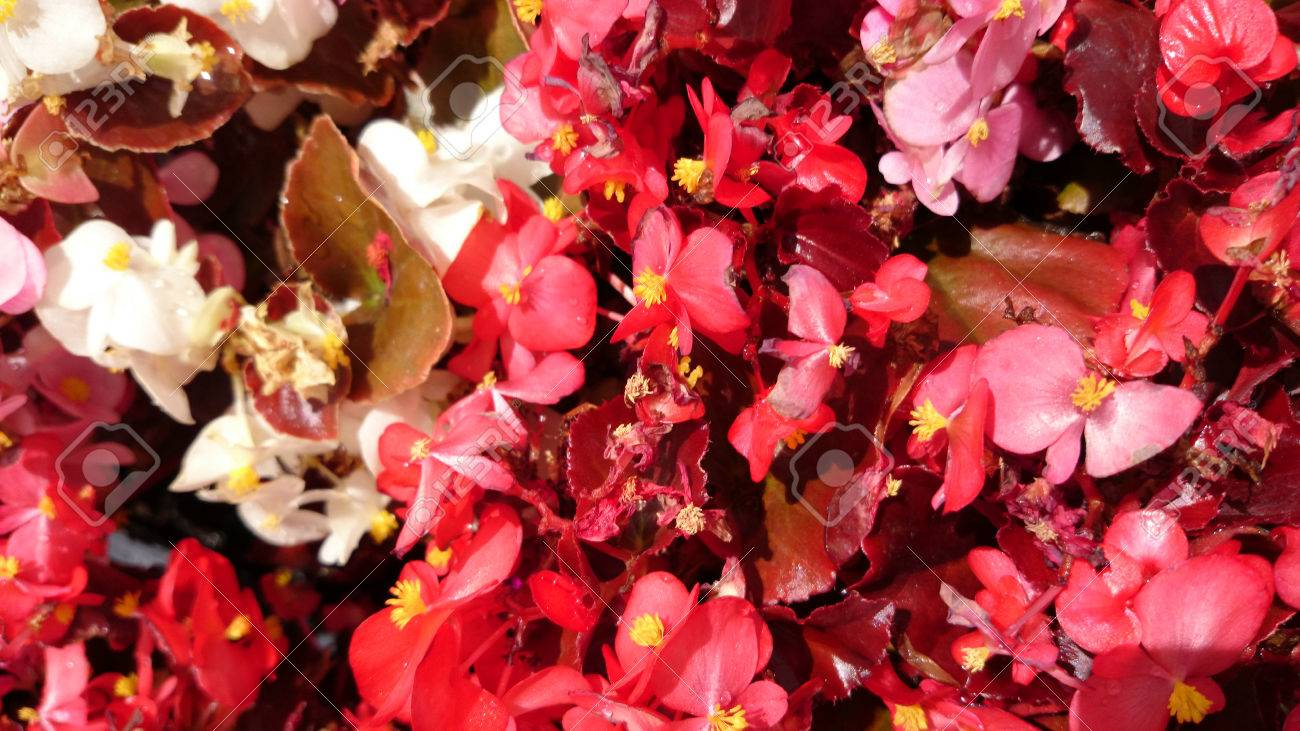 Ungewöhnlich Blätter Färben Blumen Galerie - Framing Malvorlagen ...