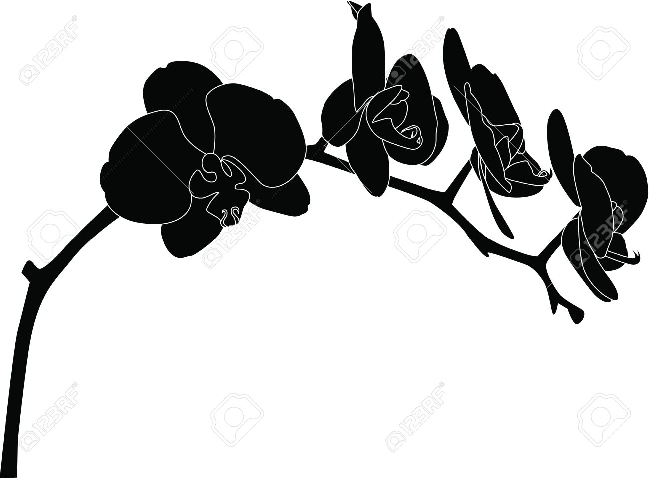 Orchids flowers it is isolated Stock Vector - 14238089
