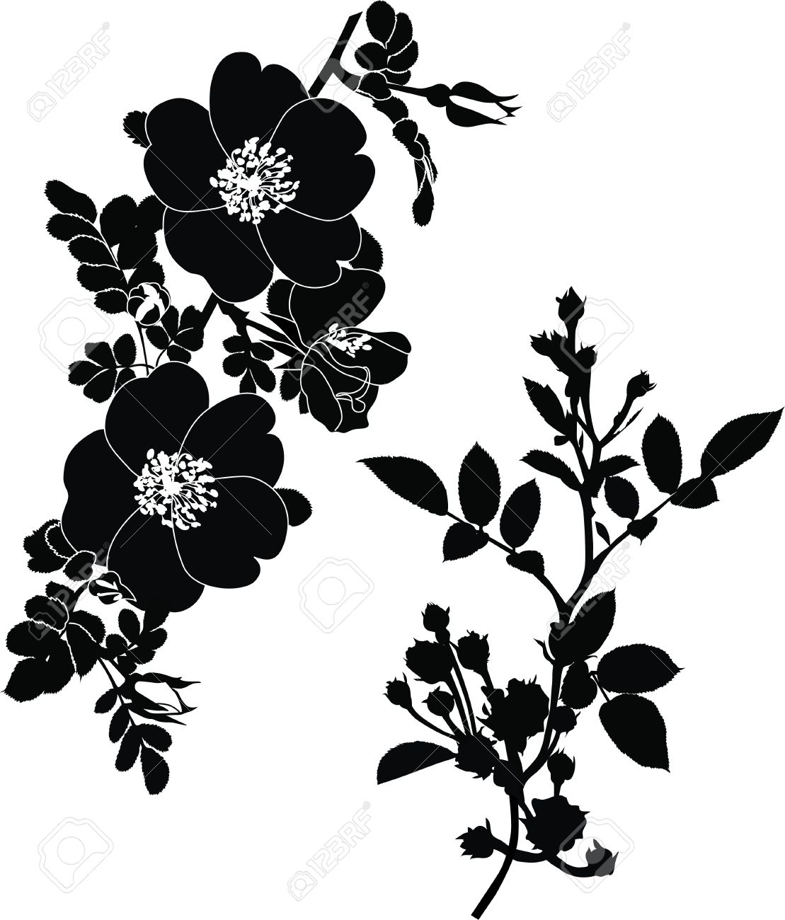 rose dogrose flowers it is isolated a holiday Stock Vector - 14293983