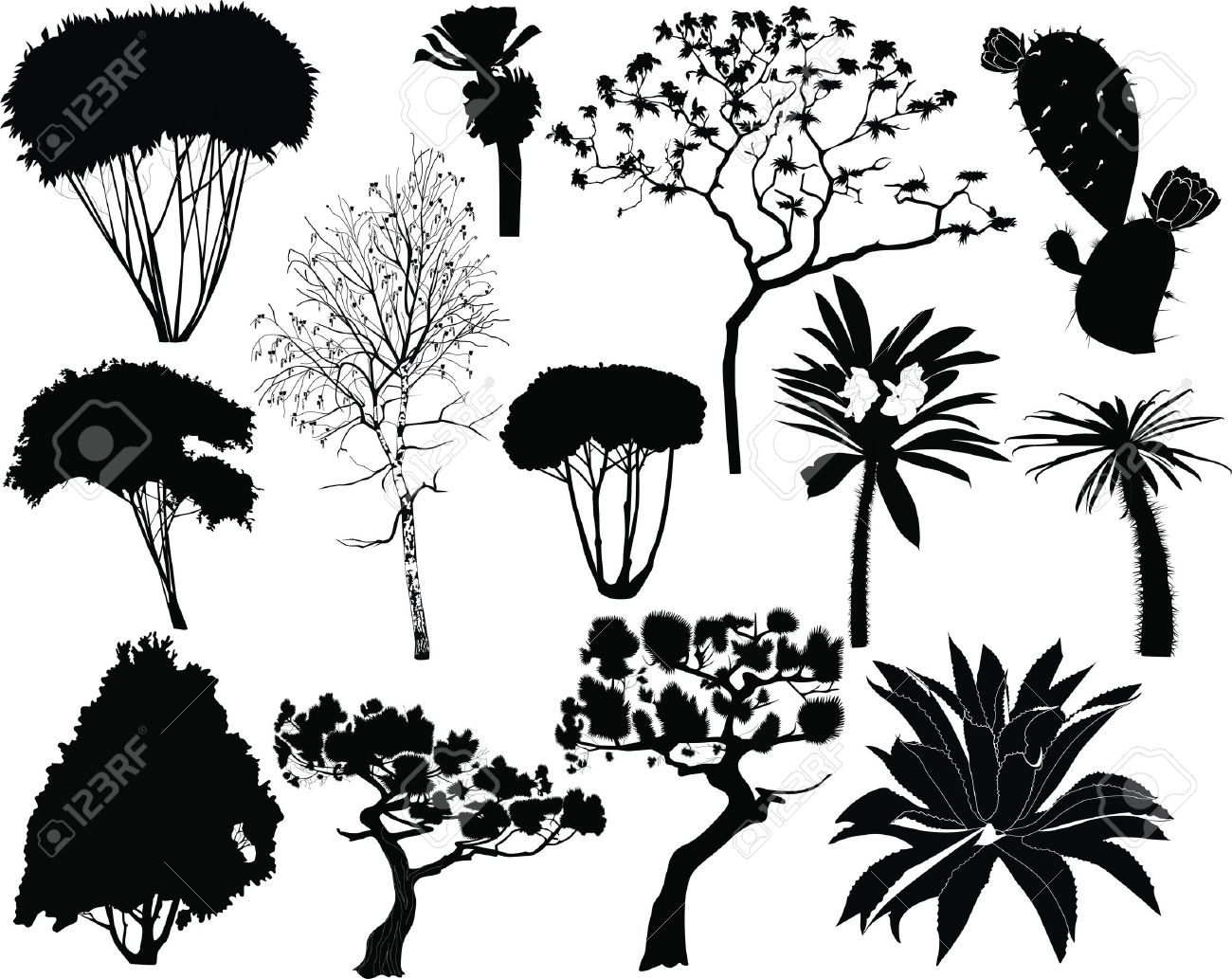 trees and plants of tropical countries fur-tree birch palm Stock Vector - 14705875