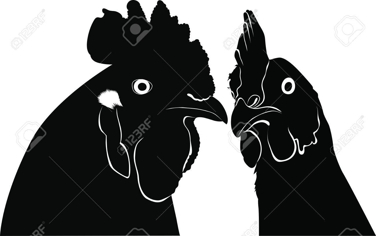 Cock a hen a chicken of a bird it is isolated  a farm Stock Vector - 15193116