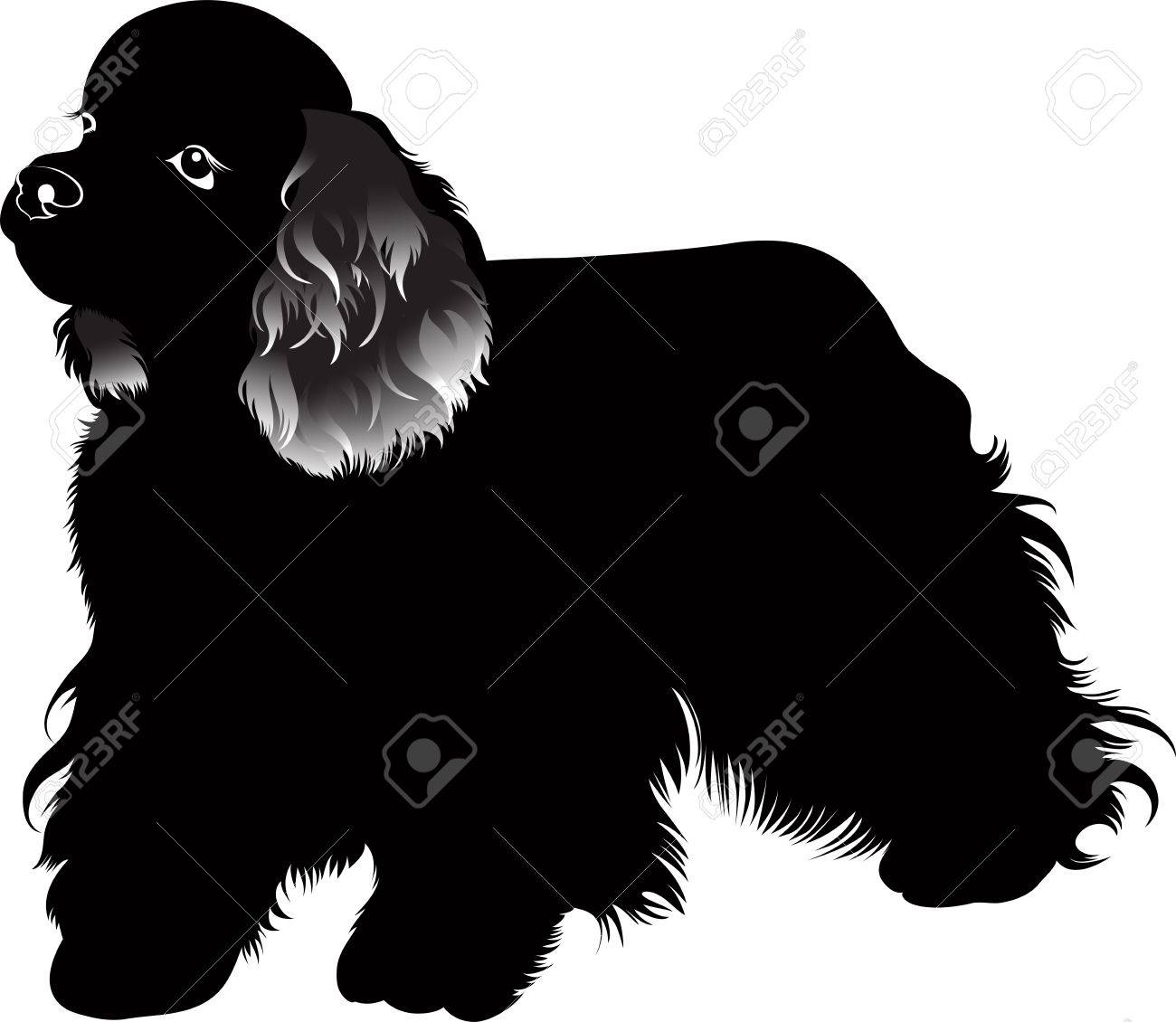 Cocker Spaniel Dog Vector Isolated On White Background Royalty ...