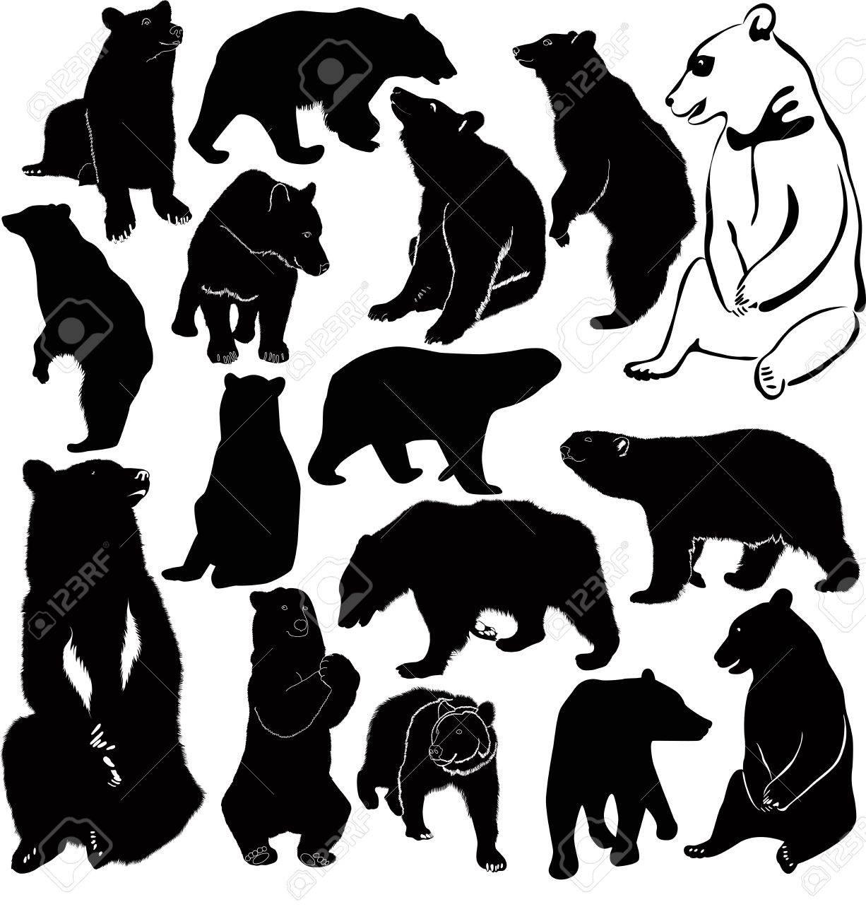 Bears white brown animals Stock Vector - 18159056