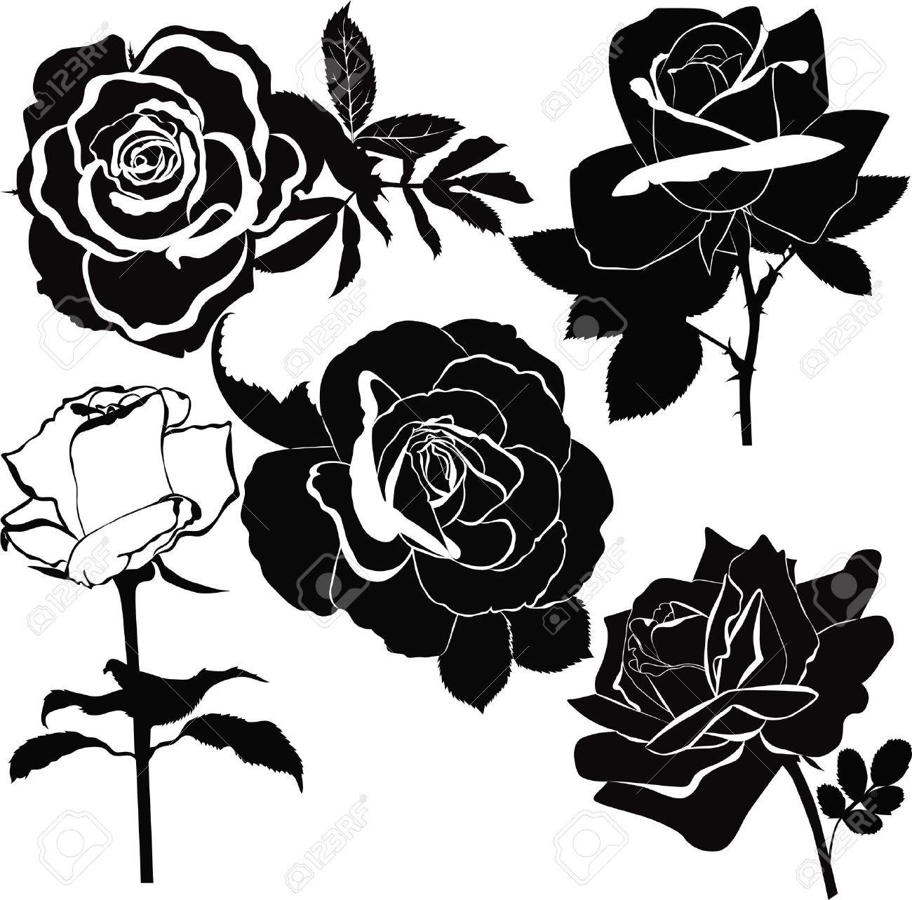 Roses flowers it is isolated a holiday Stock Vector - 18385094