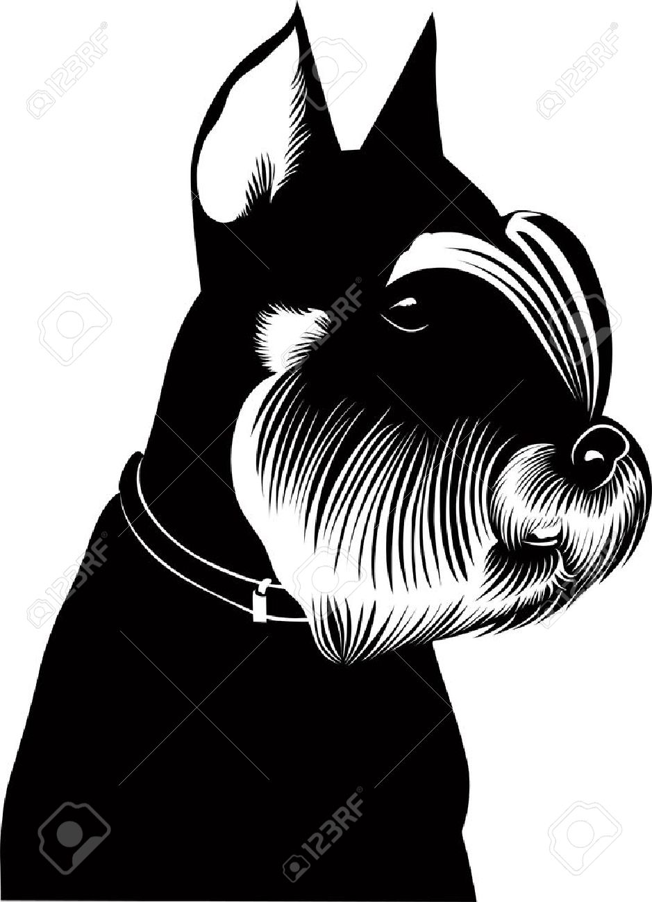 miniature schnauzer puppy dog vector isolated Stock Vector - 20463807