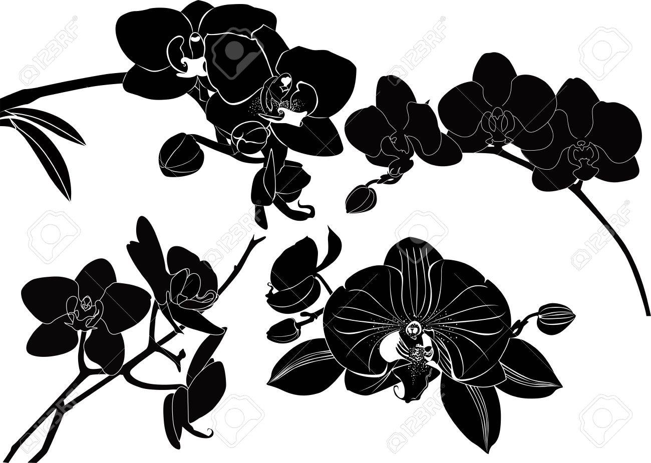 orchid flowers collection isolated on a white background Stock Vector - 21574513