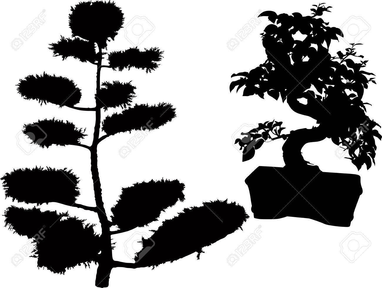 rubber plant bonsai trees and conifers Stock Vector - 21574533