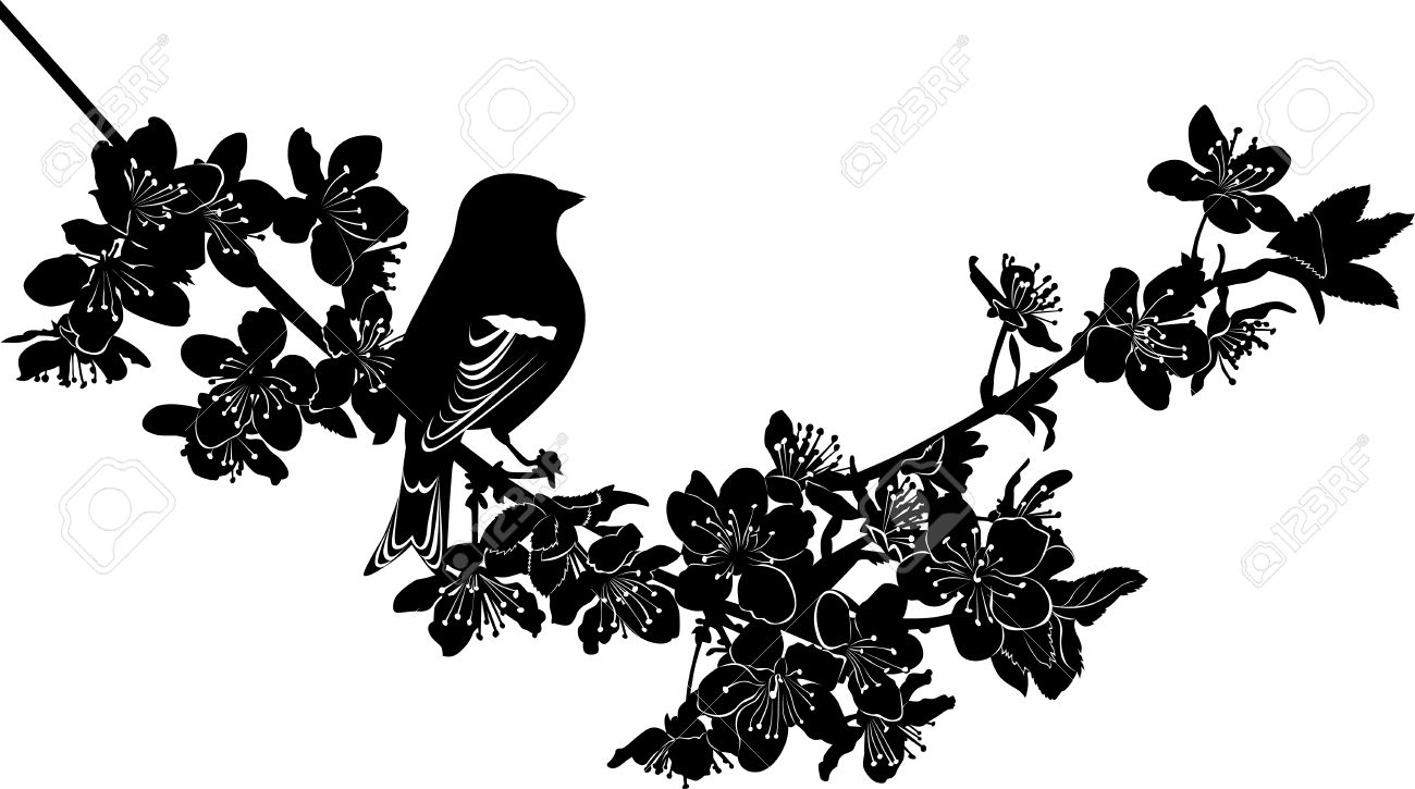 twig cherry blossoms bird royalty free cliparts, vectors, and