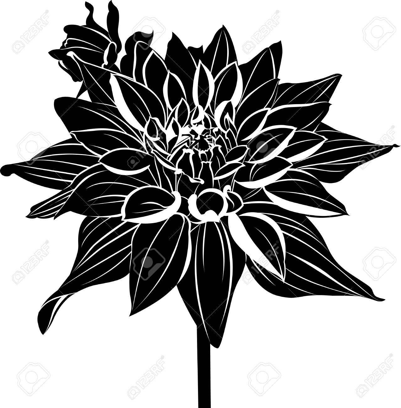 Dahlias vintage elegant flowers black and white vector dahlias vintage elegant flowers black and white vector illustration dahlias flowers vector izmirmasajfo