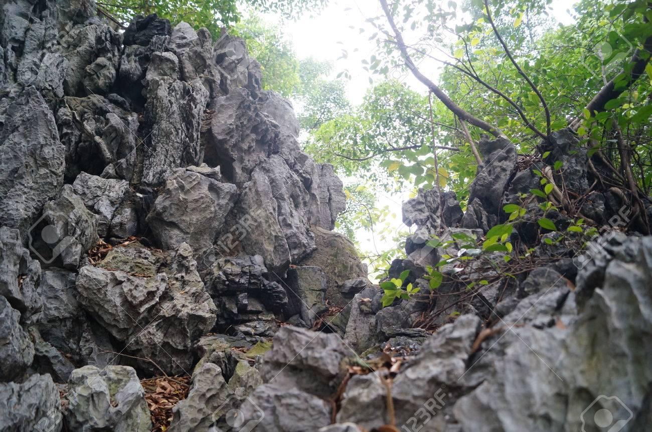 Rocaille Ombre rocaille dans les arbres à l'ombre du paysage banque d'images et