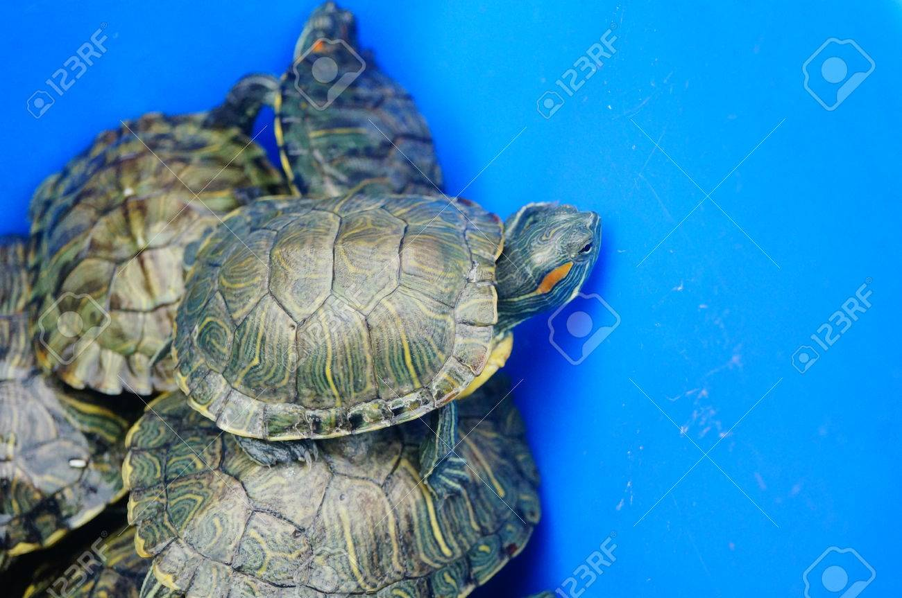 Turtles In The Pet Market Waiting For Sale Stock Photo Picture And Royalty Free Image Image 75555320