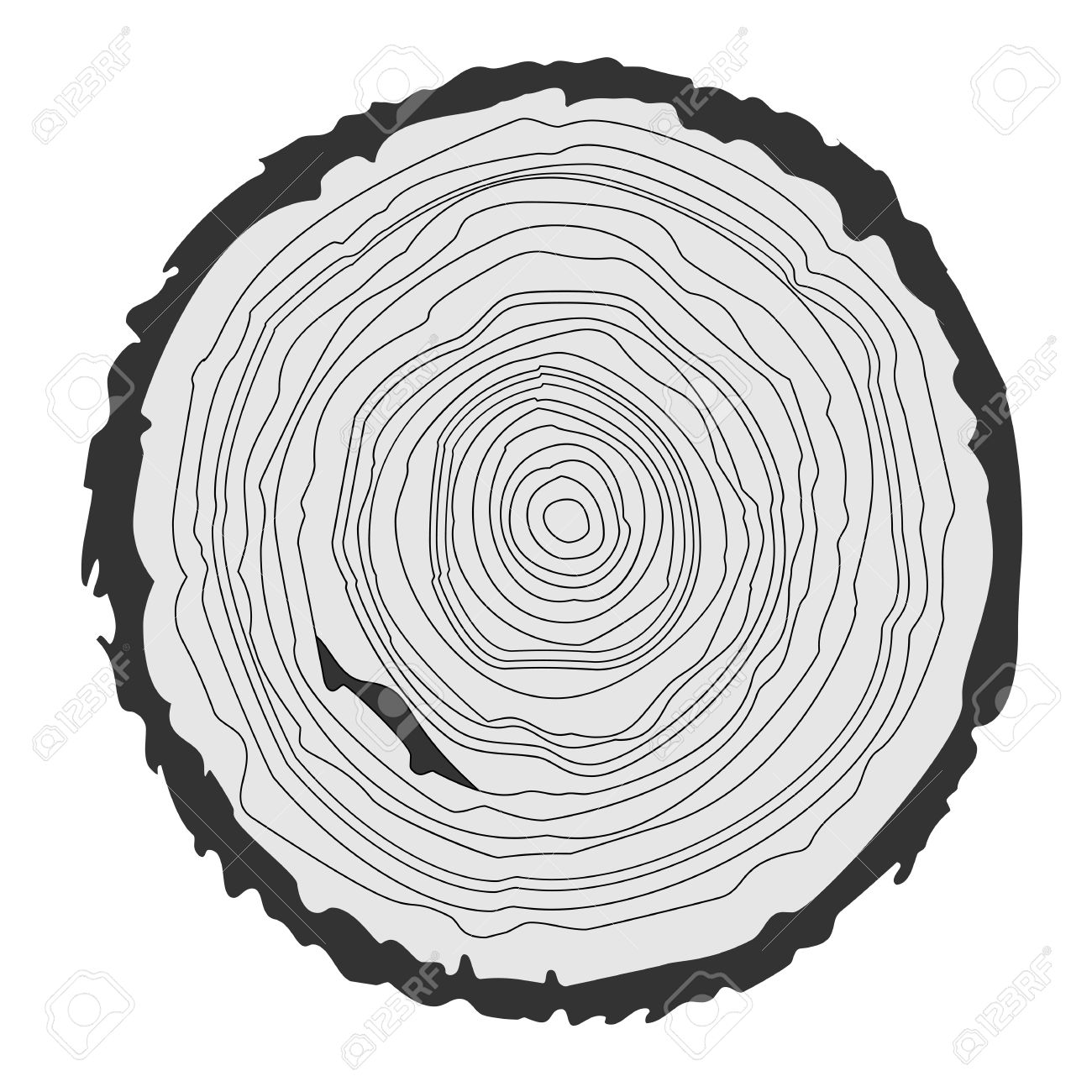 Tree Rings Images &- Stock Pictures. Royalty Free Tree Rings Photos ...