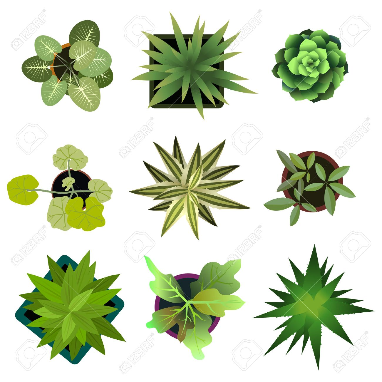Top view. plants Easy copy paste in your landscape design projects or architecture plan. Isolated flowers on white background. Vector - 58520987
