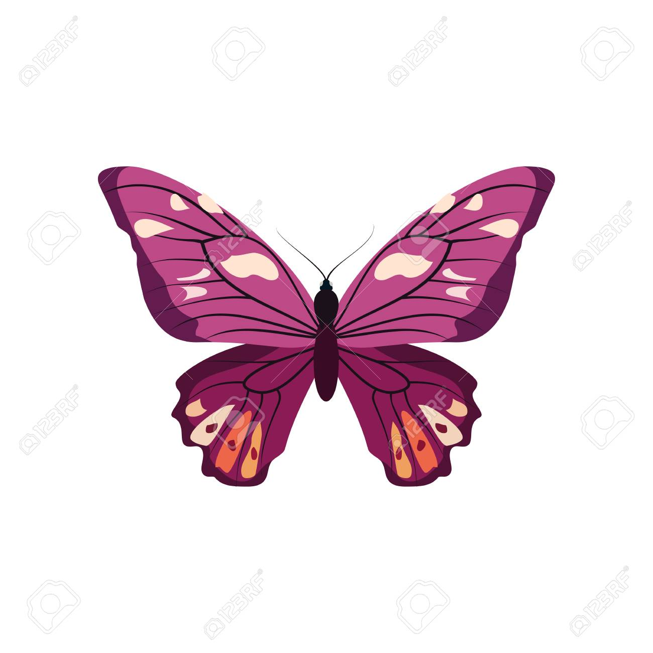 Big Collection Of Colorful Butterflies. Butterflies Isolated ...