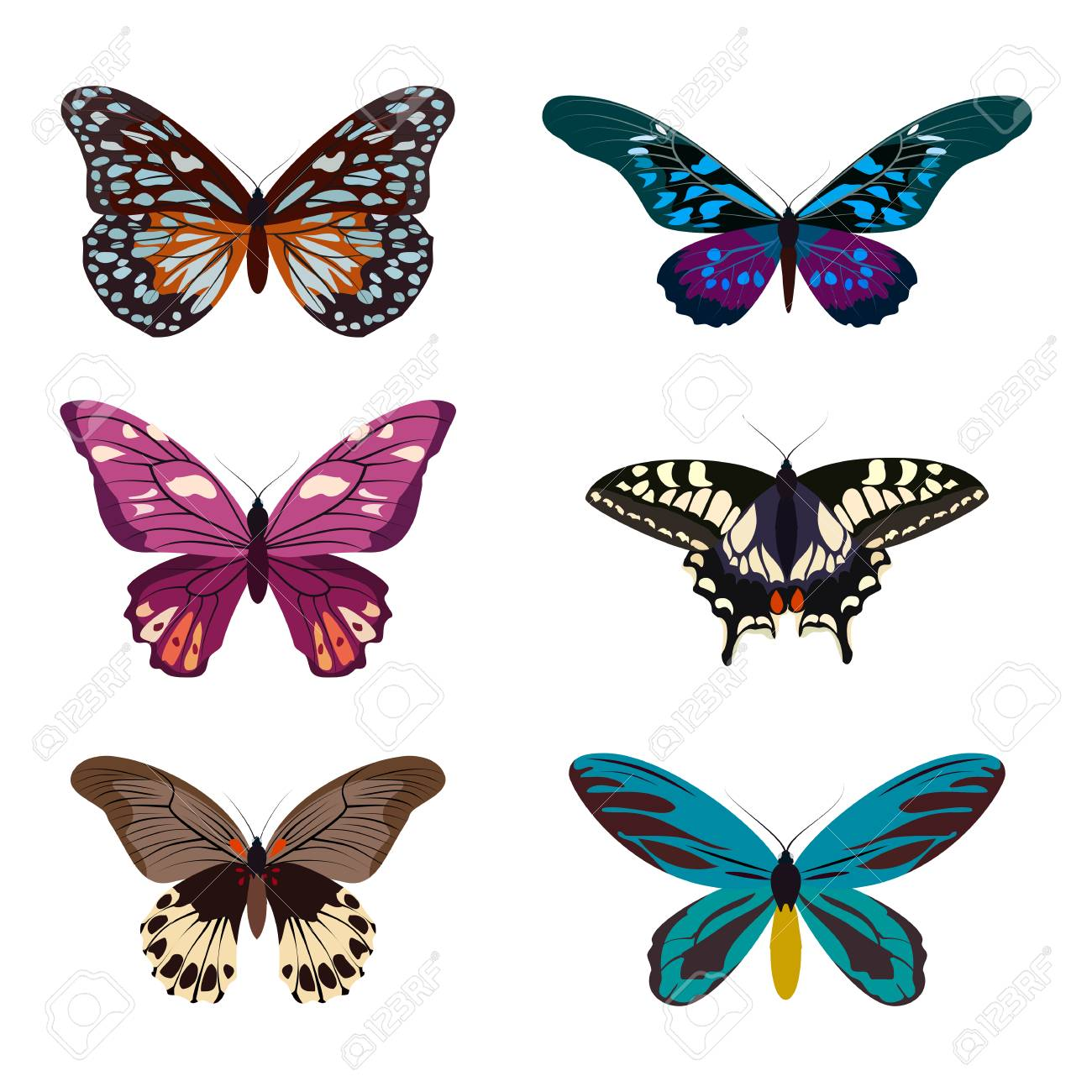 Big Collection Of Colorful Butterflies. Butterflies Isolated.. Stock ...