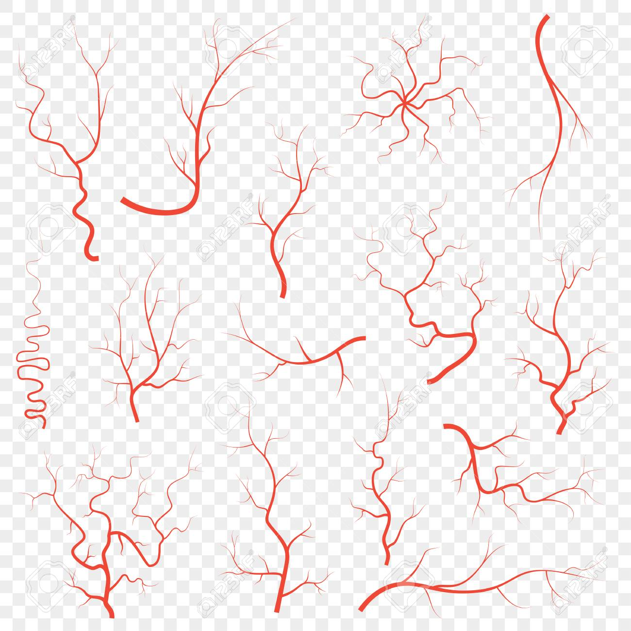 Human Red Eye Veins Set Anatomy Blood Vessel Arteries Illustration Royalty Free Cliparts Vectors And Stock Illustration Image 126304049 Blood vessel texture illustrations & vectors. human red eye veins set anatomy blood vessel arteries illustration
