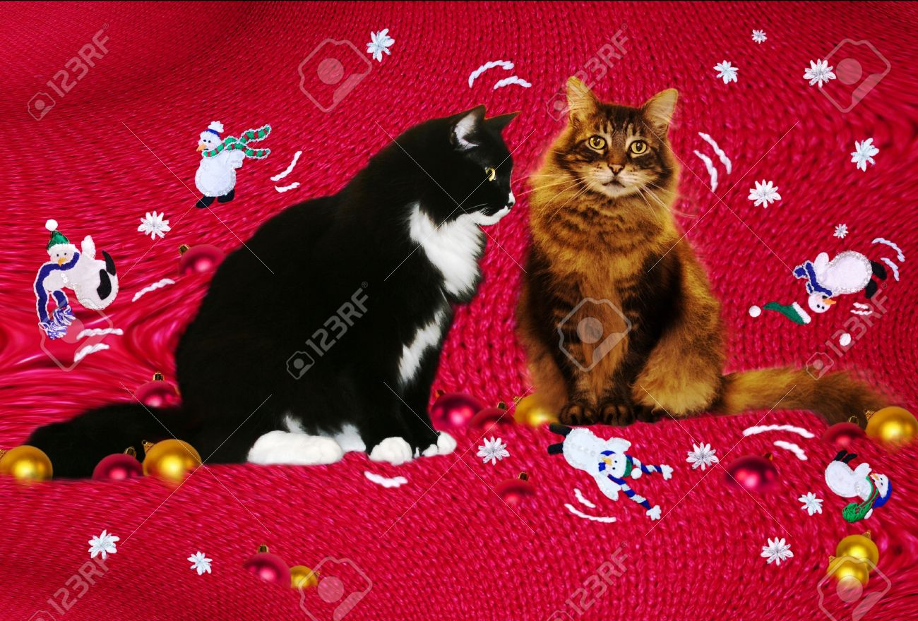 Christmas Cats-vintage Christmas Sweater Inspired Playful Background ...