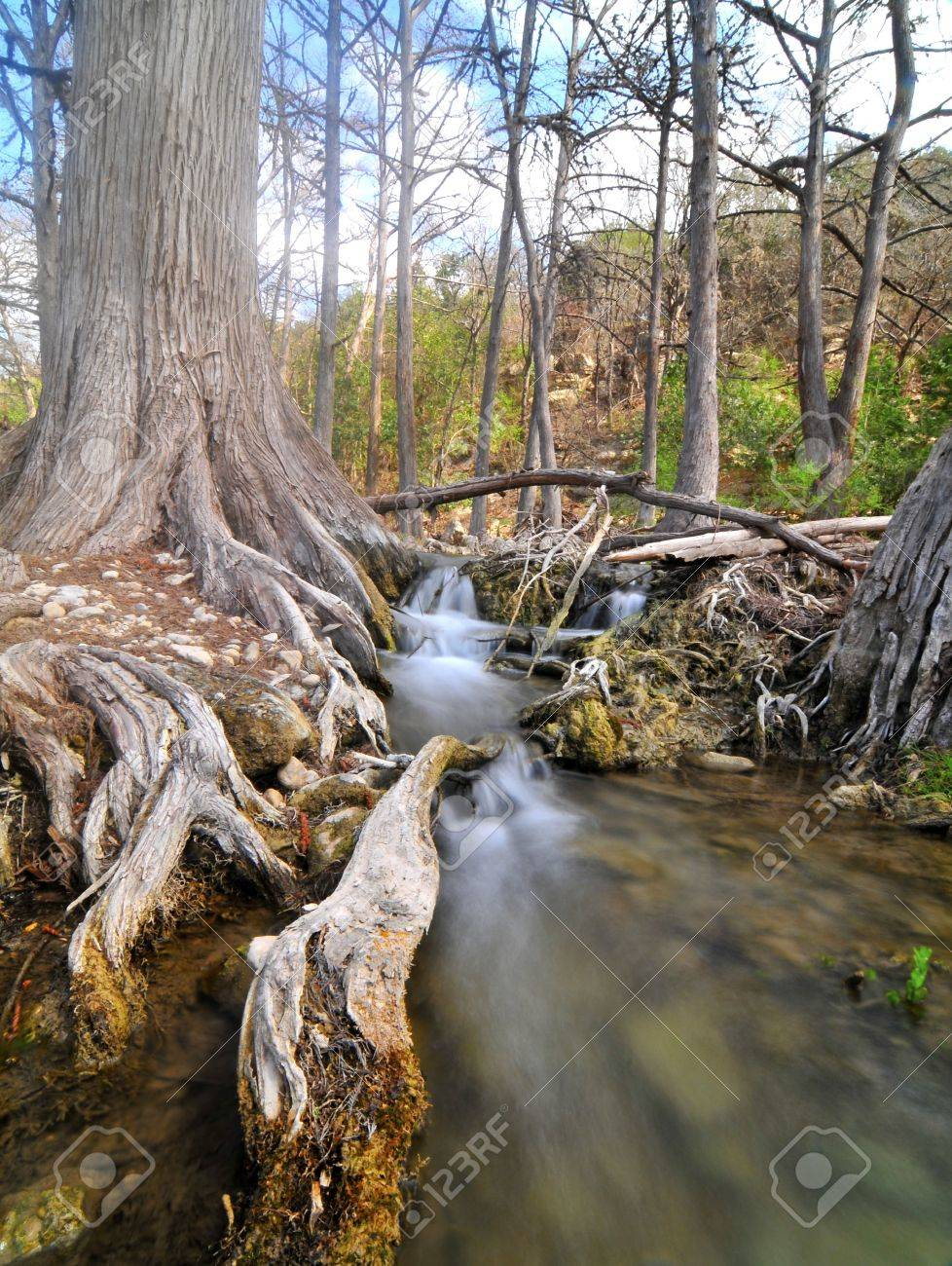 waterfall on cypress lined creek, texas hill country Stock Photo - 9922513