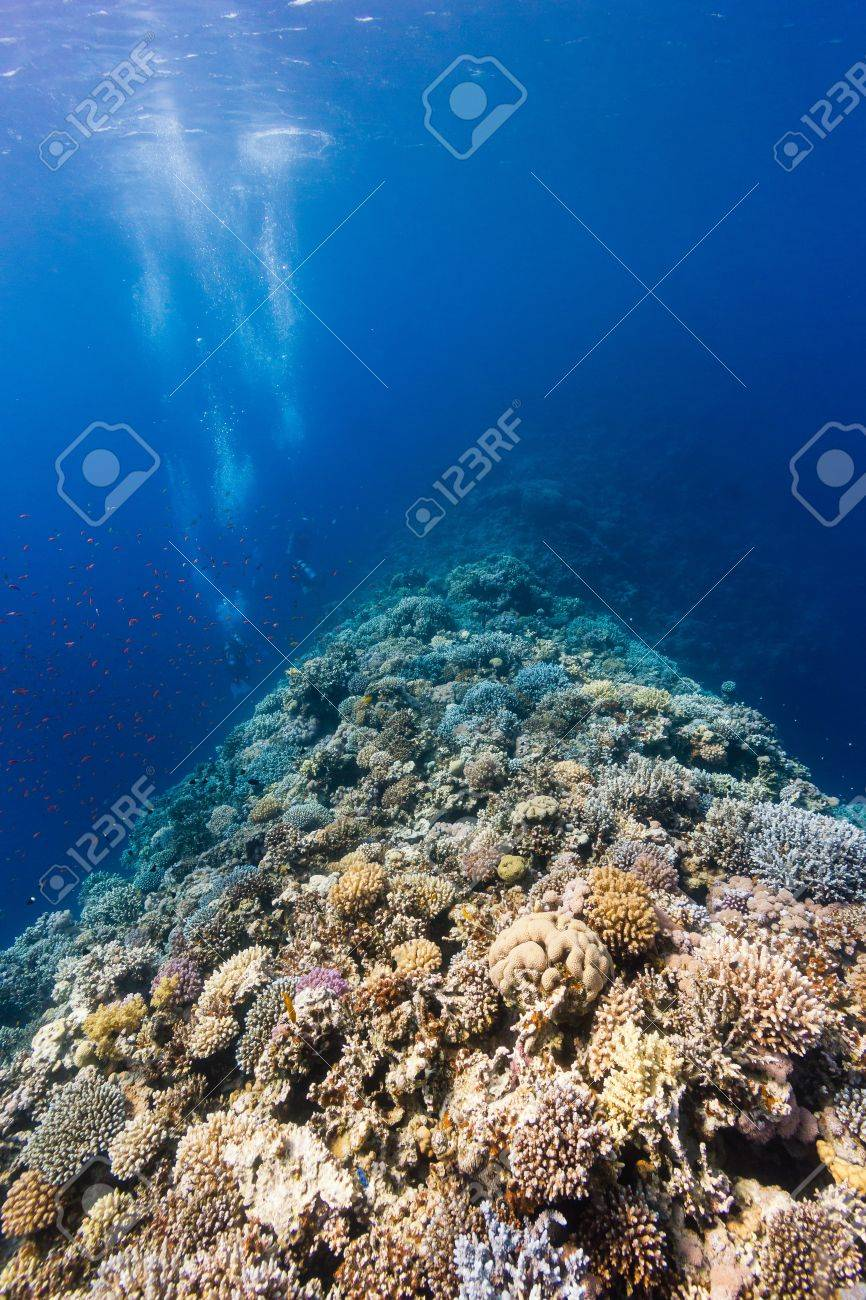 SCUBA divers explore a hard coral encrusted ridge in deep water on a tropical reef Stock Photo - 16881954