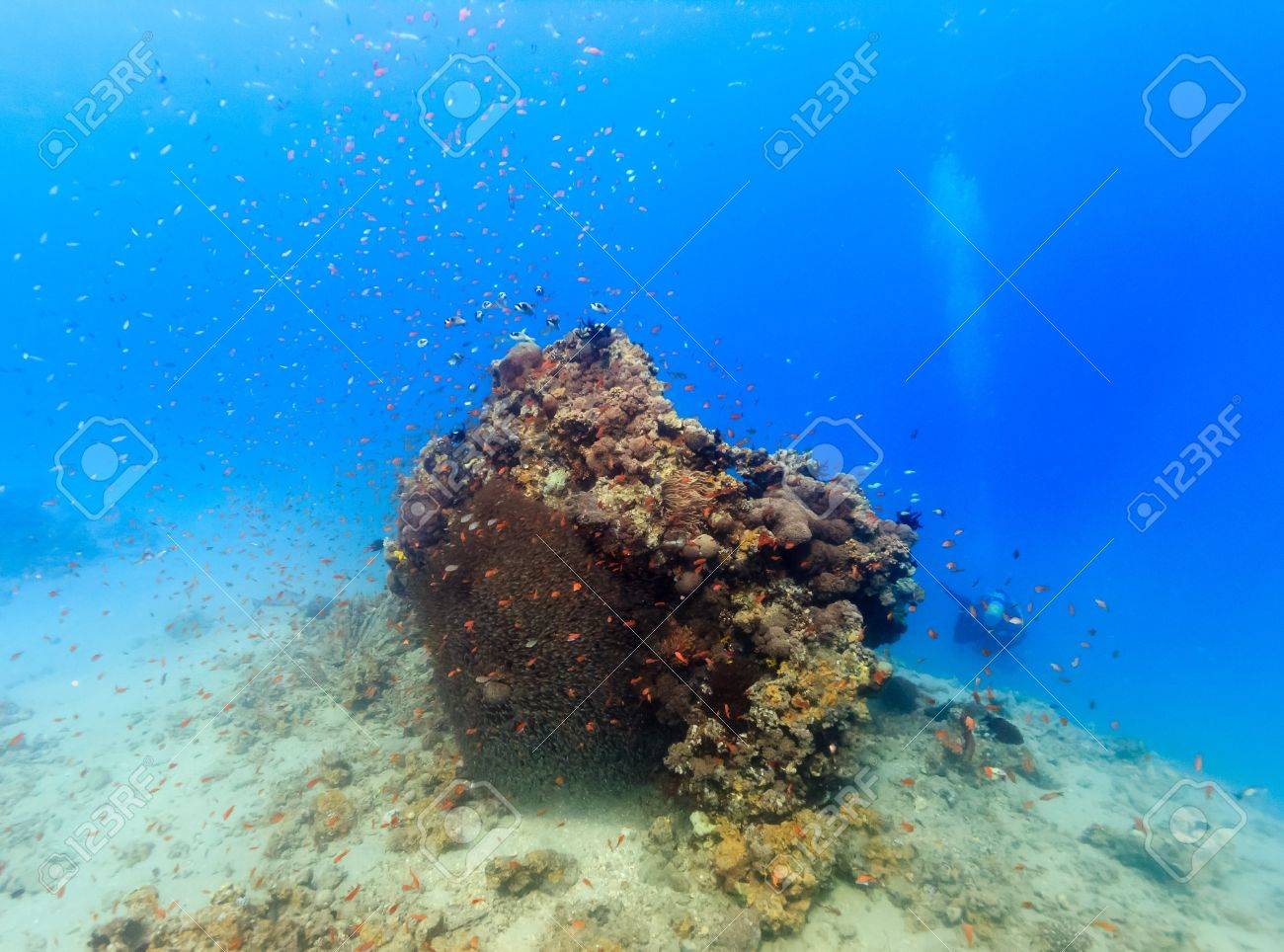 A SCUBA diver swims past a tropical fish covered coral pinnacle Stock Photo - 17121692