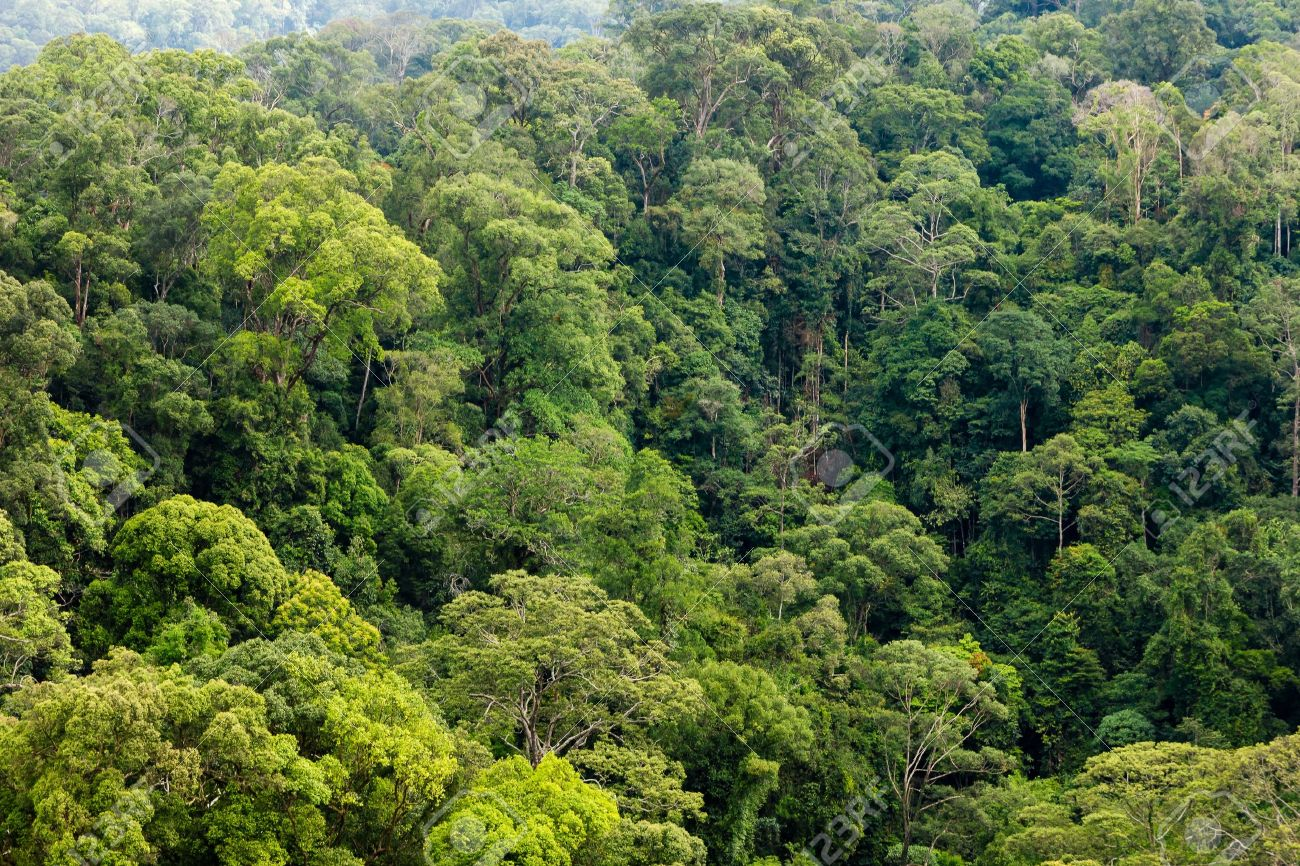 Treetrops of a tropical rainforest canopy Stock Photo - 21930405 & Treetrops Of A Tropical Rainforest Canopy Stock Photo Picture And ...